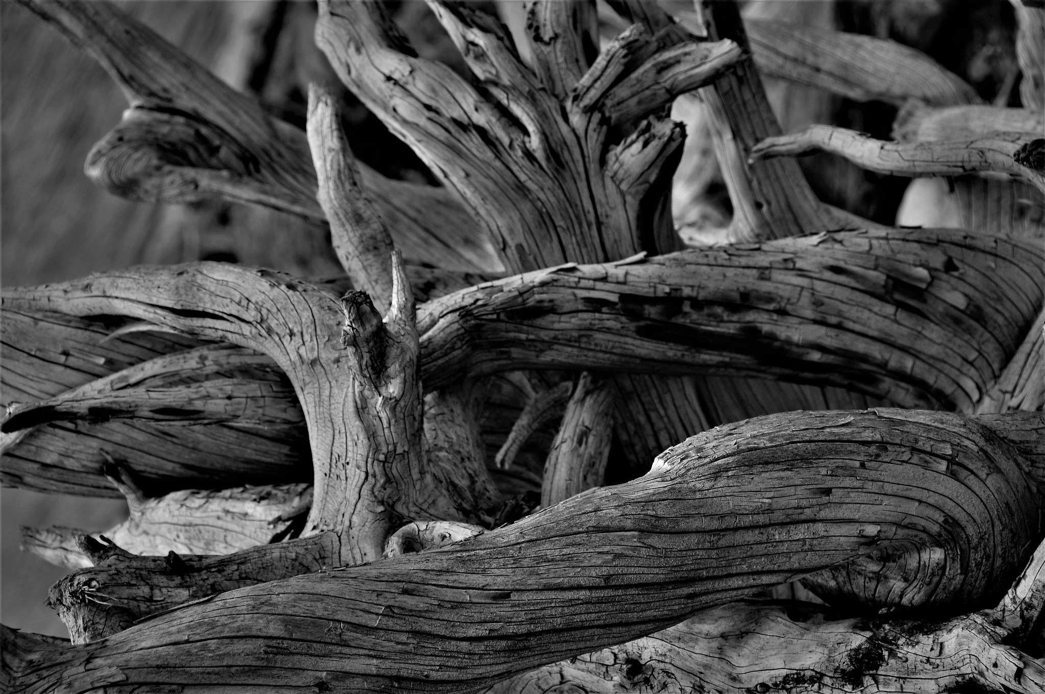 Dead roots by    Pasqual