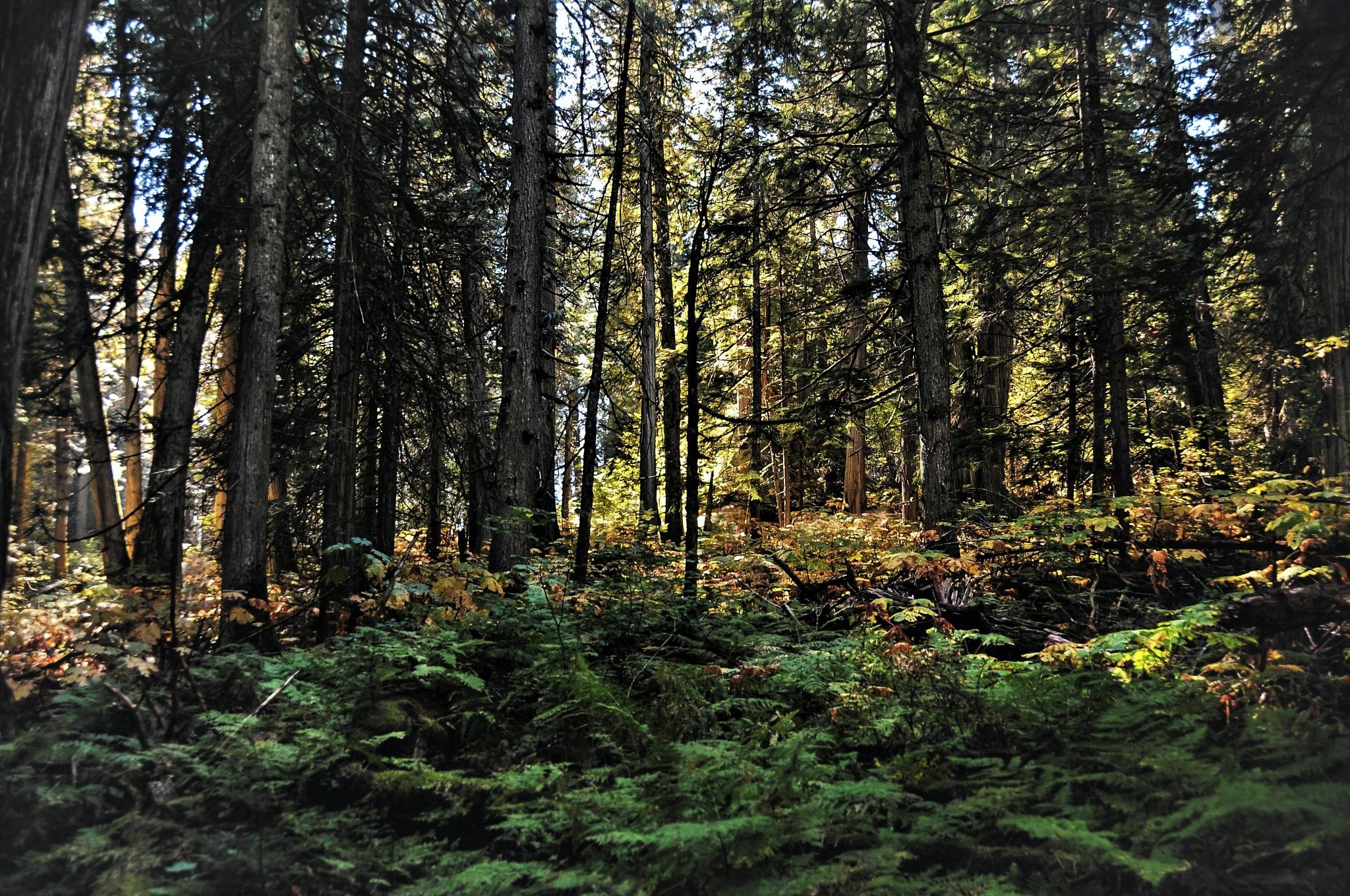 Beautiful British Columbia by Pasqual