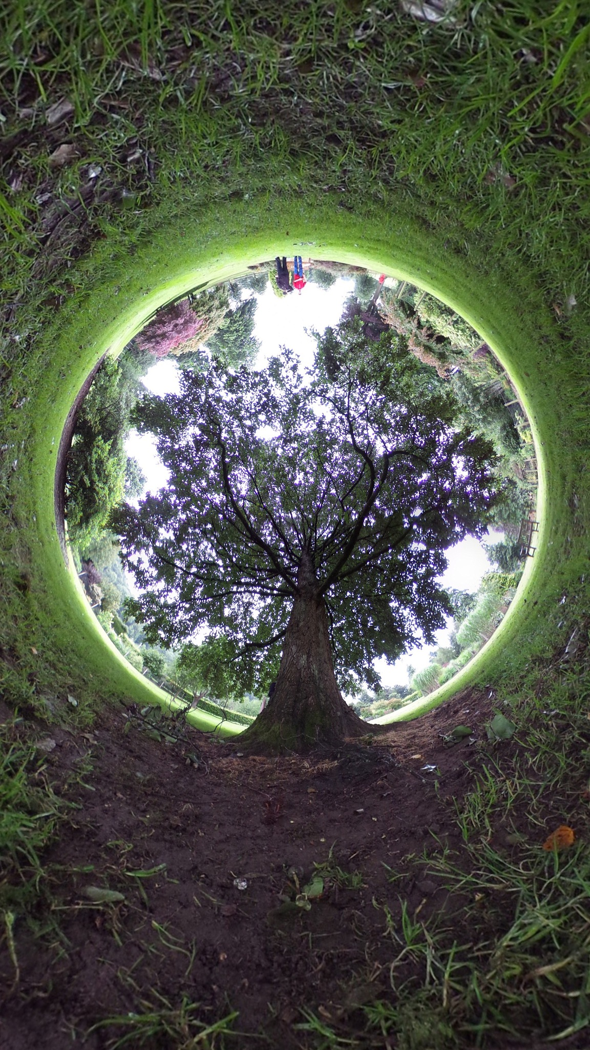 My little green planet by Ali Khajah