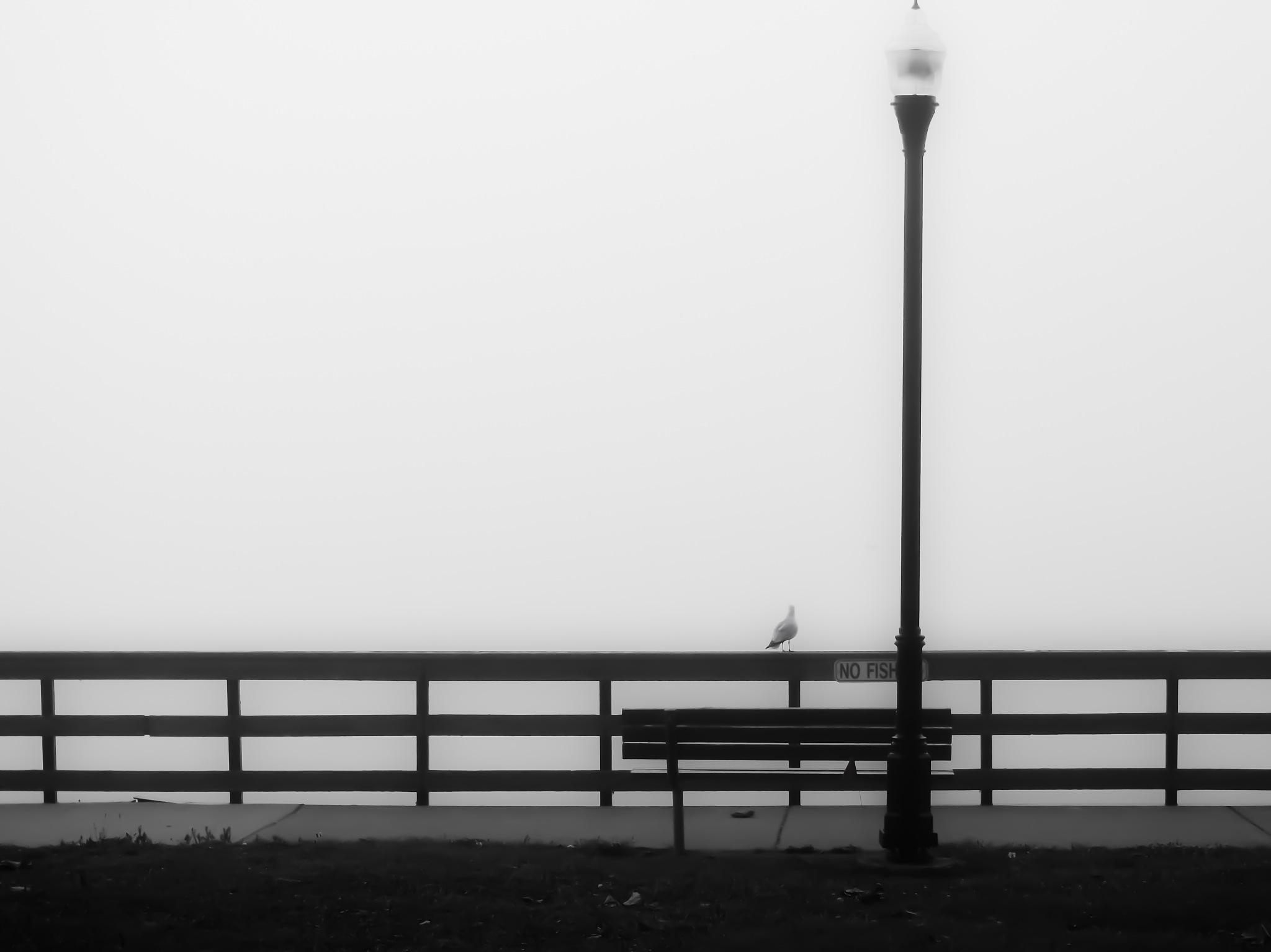 The Seagull by chuckhildebrandt7