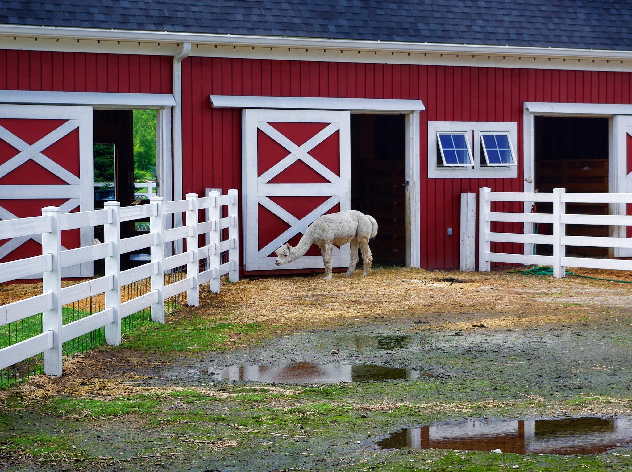 Petting Farm by chuckhildebrandt7