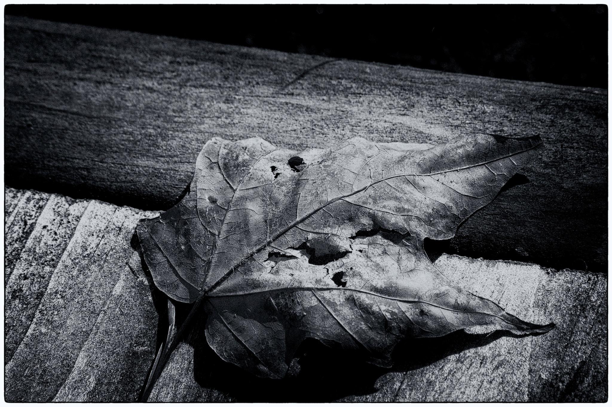 leaf by chuckhildebrandt7