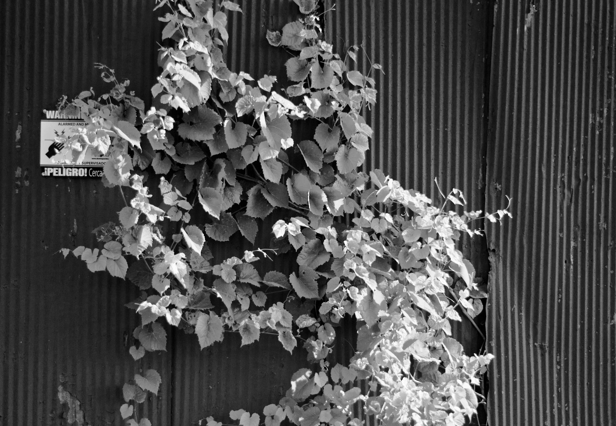 Overgrown by chuckhildebrandt7