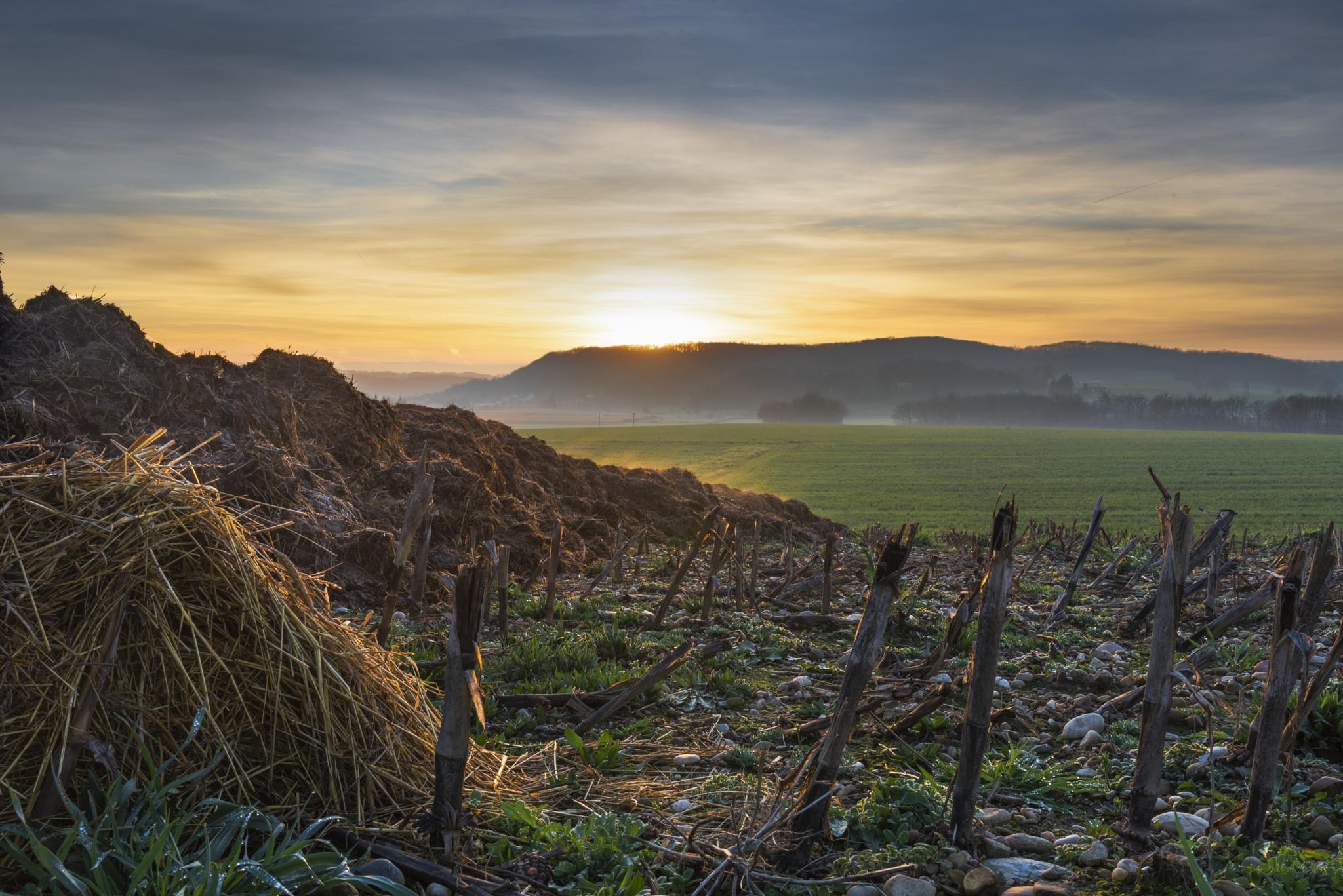sunset dri by AnthonyVairos