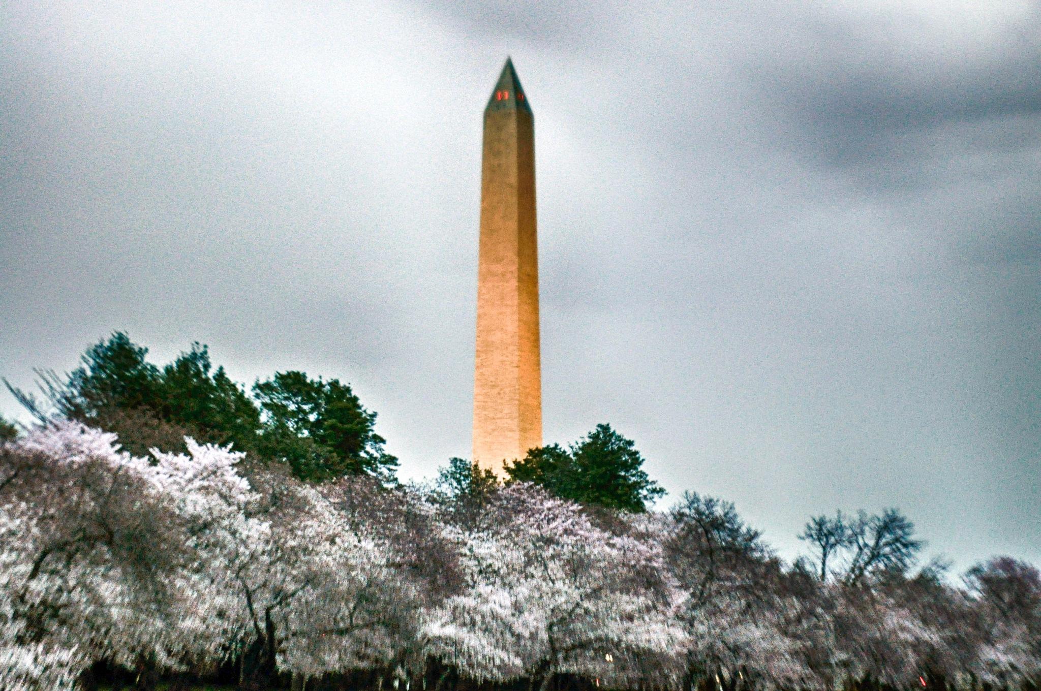 Washington Monument & Cherry Blossoms/2018 by aemdigitalphotography