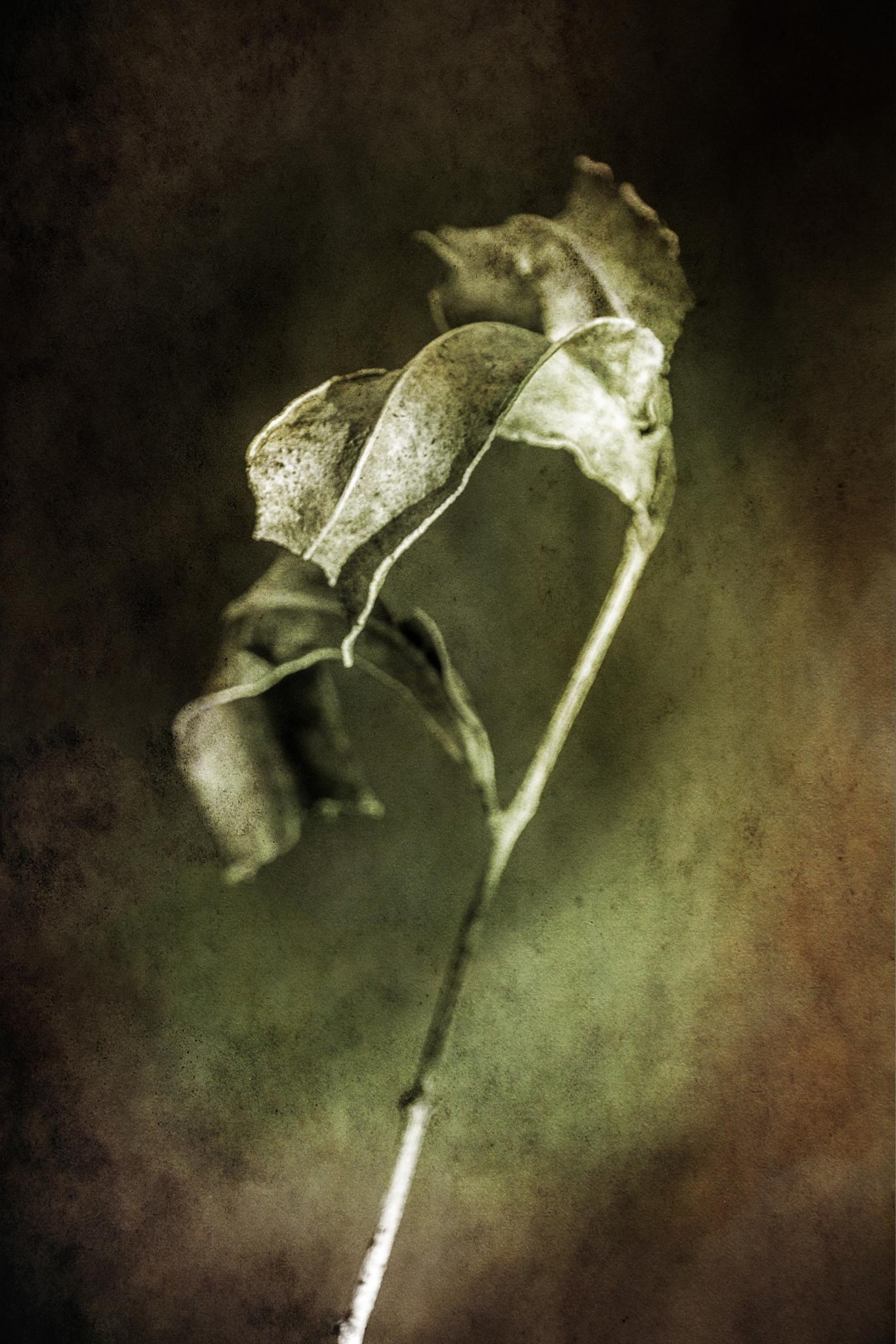 Dead leaves by Leanne Smithers