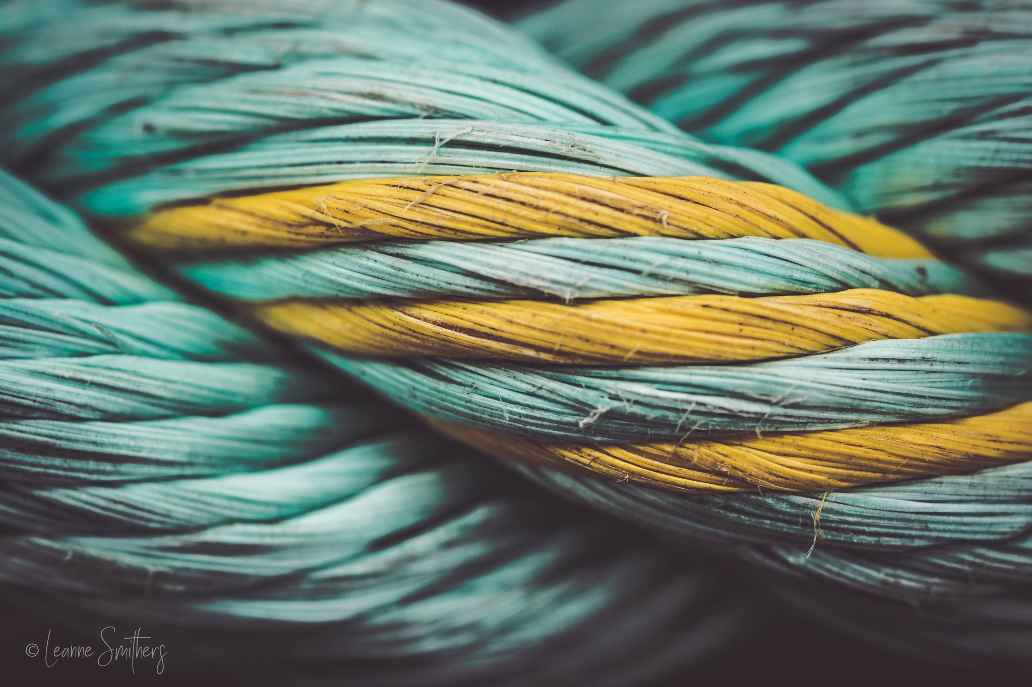 Rope by Leanne Smithers