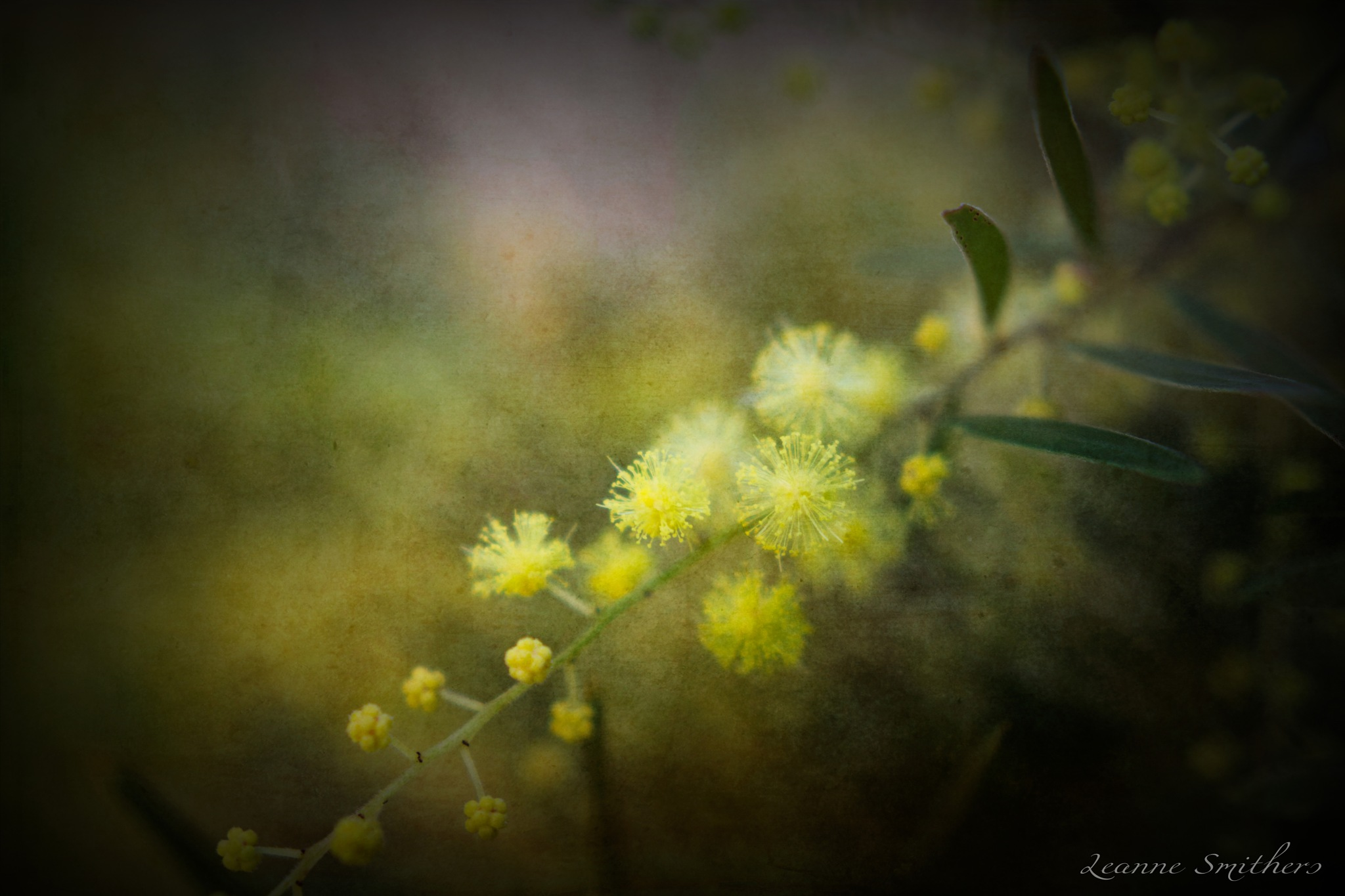 Spring is Coming by Leanne Smithers
