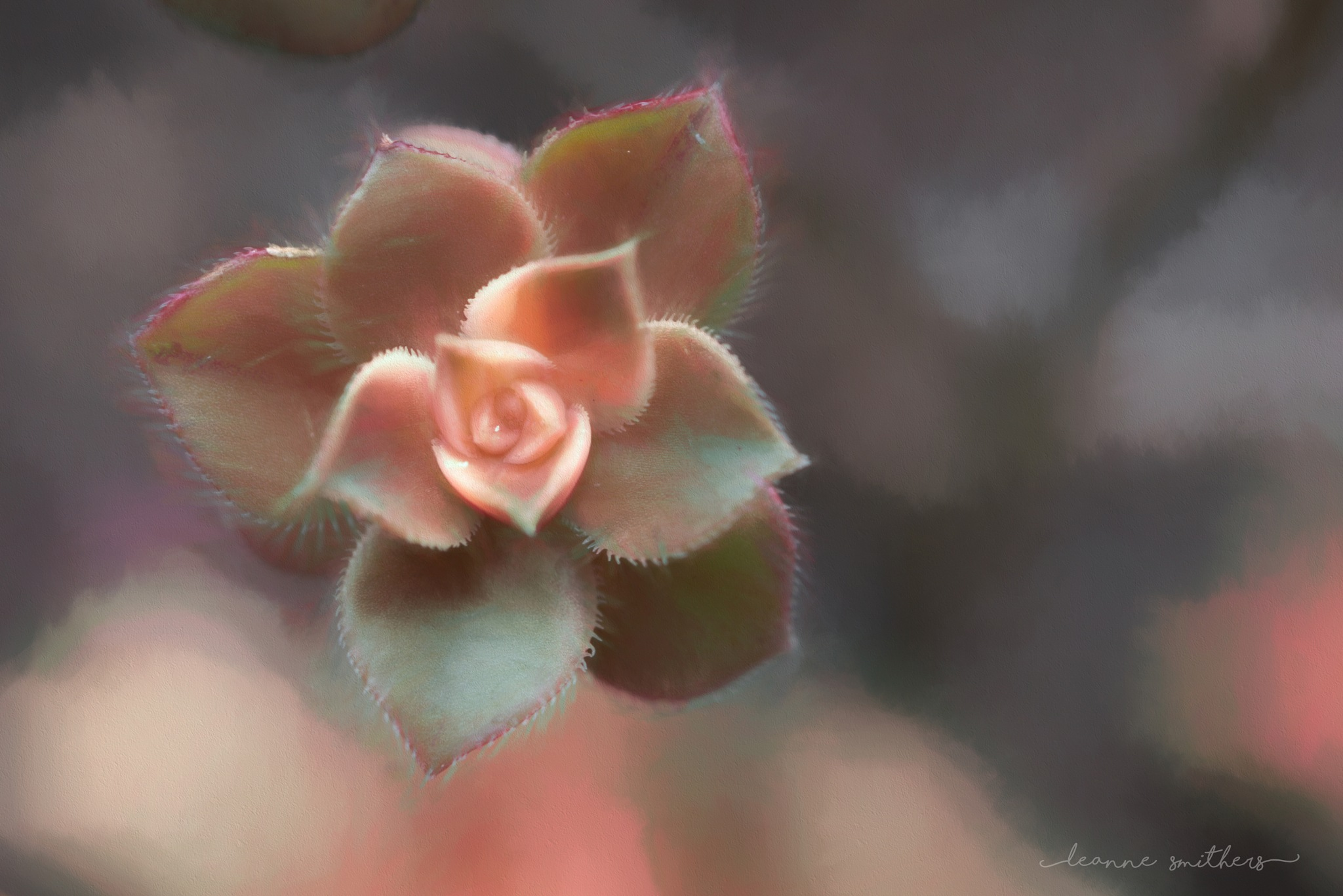 Succulent by Leanne Smithers
