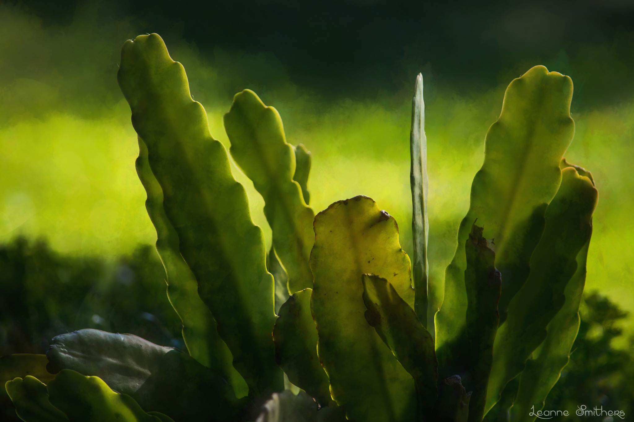 Cactus by Leanne Smithers