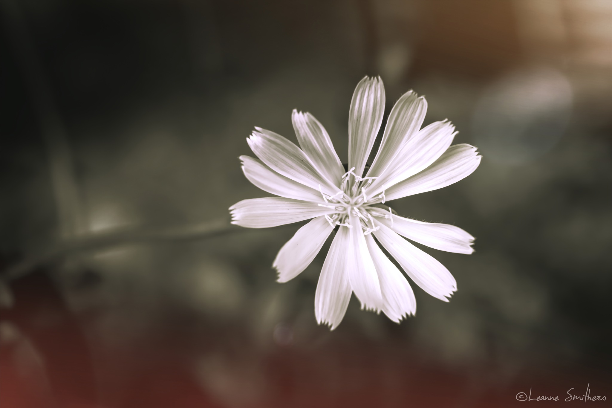 Flower burst by Leanne Smithers