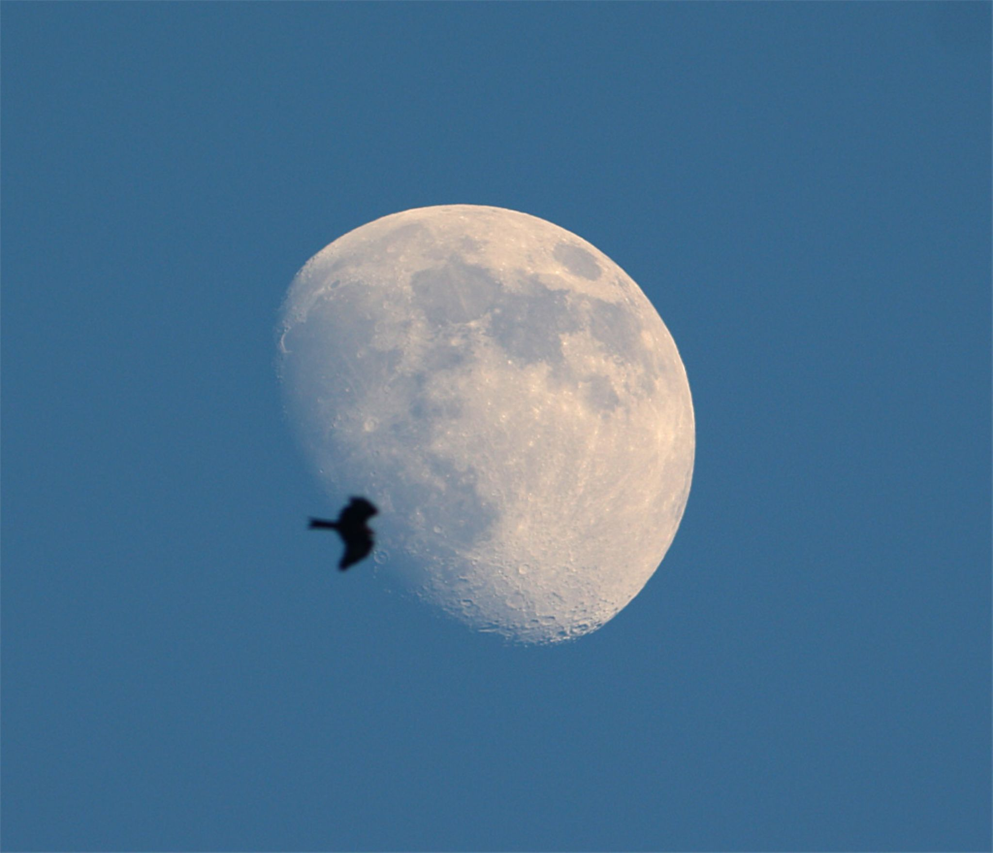 The Eagle on the Moon by tangyuiching