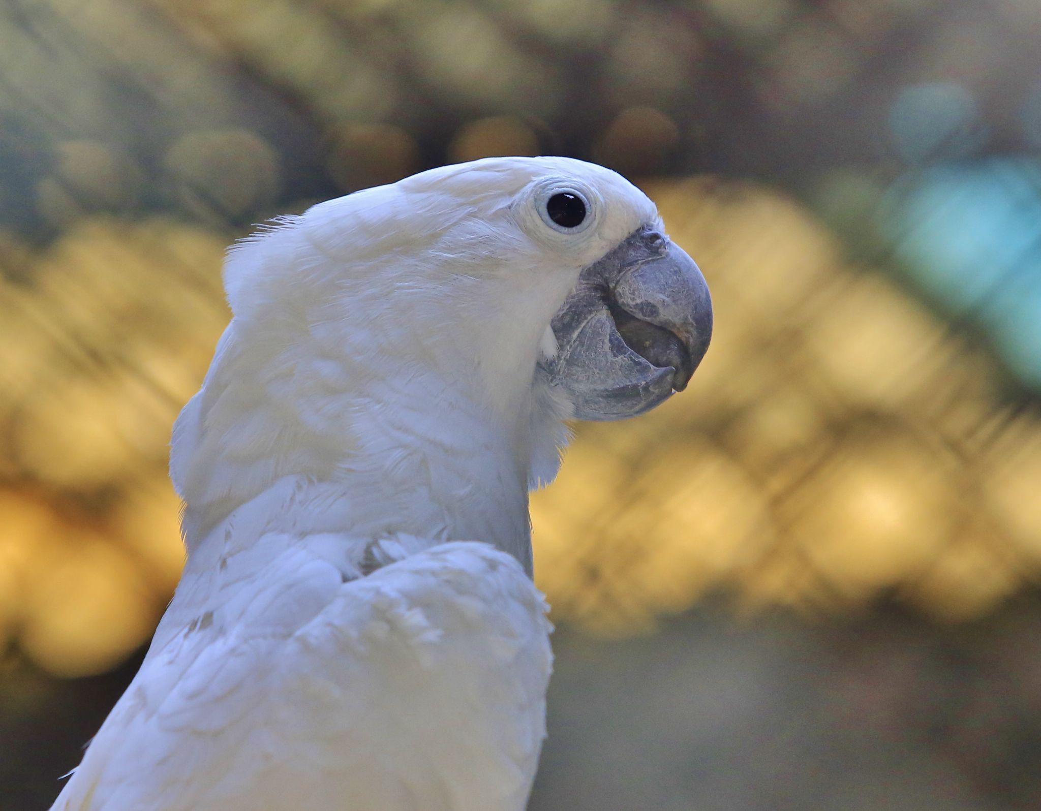 Click from Dubai Zoo... by vmsarath