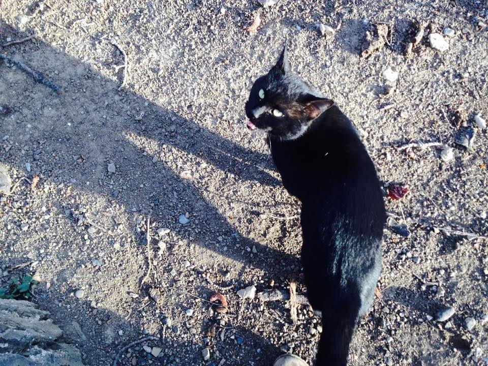 Black Cat by Mag Num