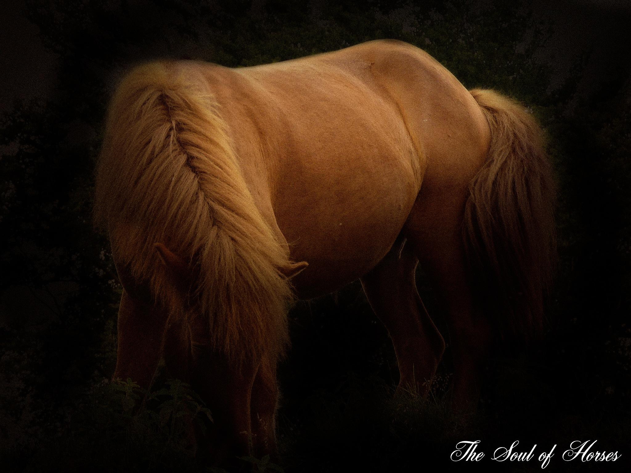 The beauty in its simplest form. by Freddy Juhl
