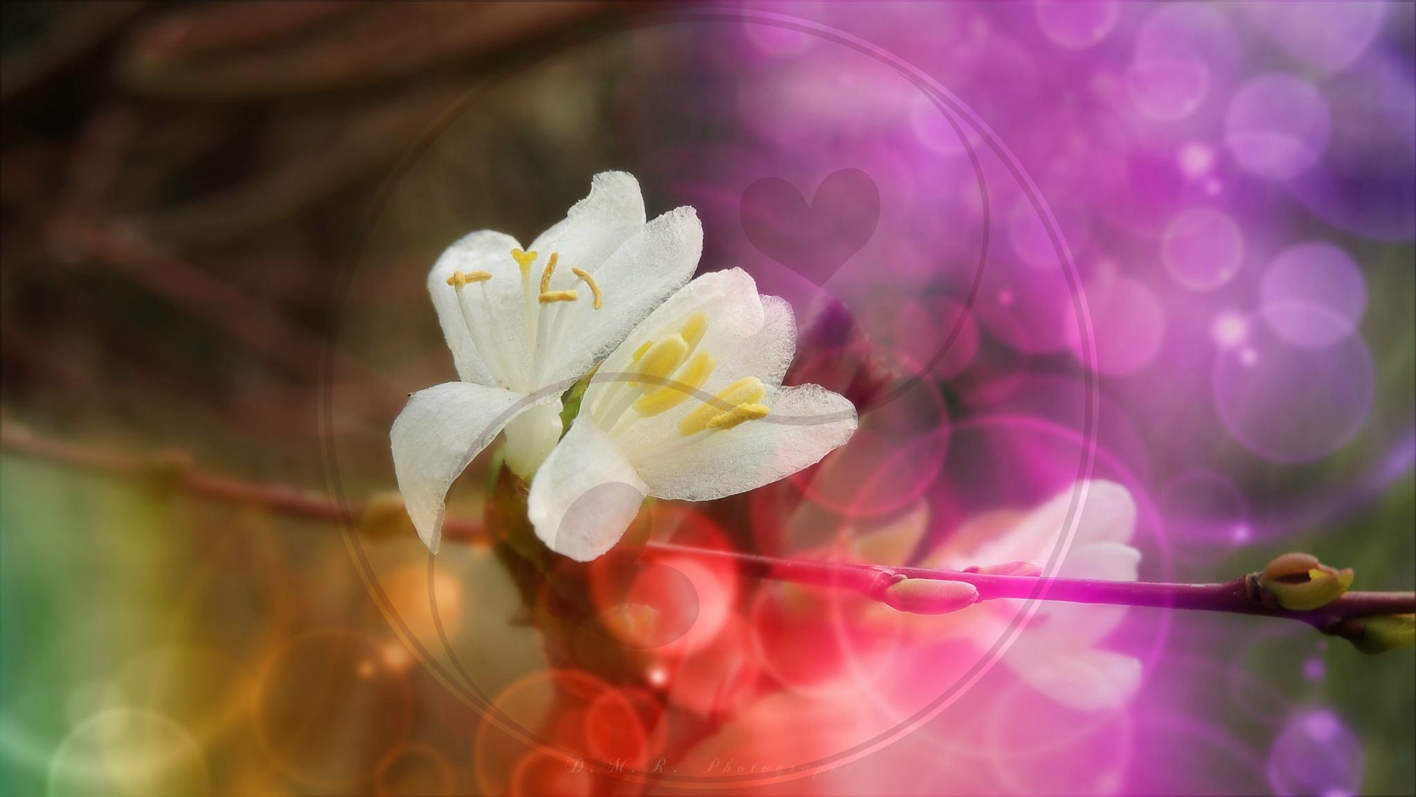 ♡♥♡  Happy Valentine's Day!!!  ♡♥♡ by Драгана М. Реџић