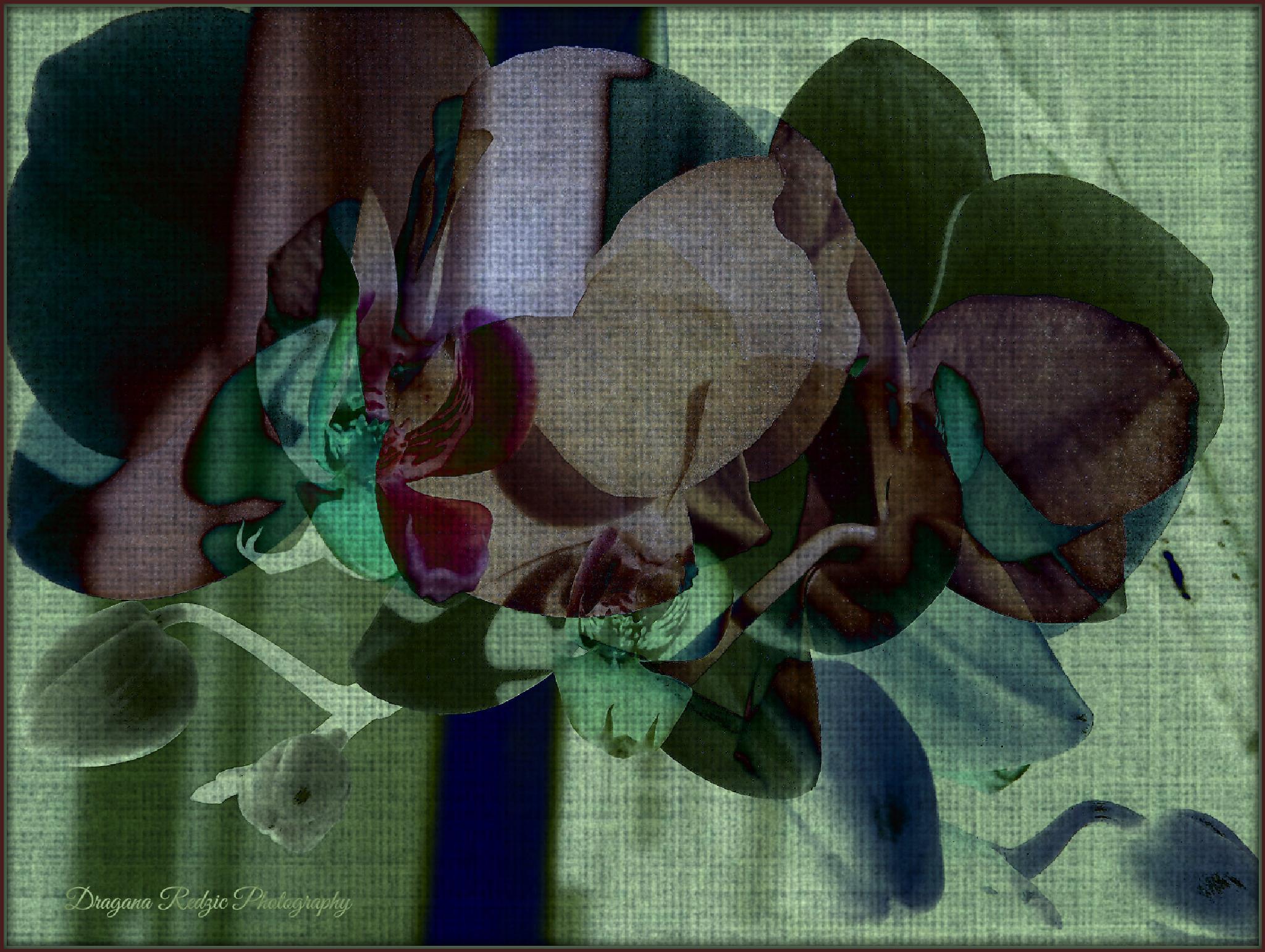 Orchids ~ Art photo by Драгана М. Реџић