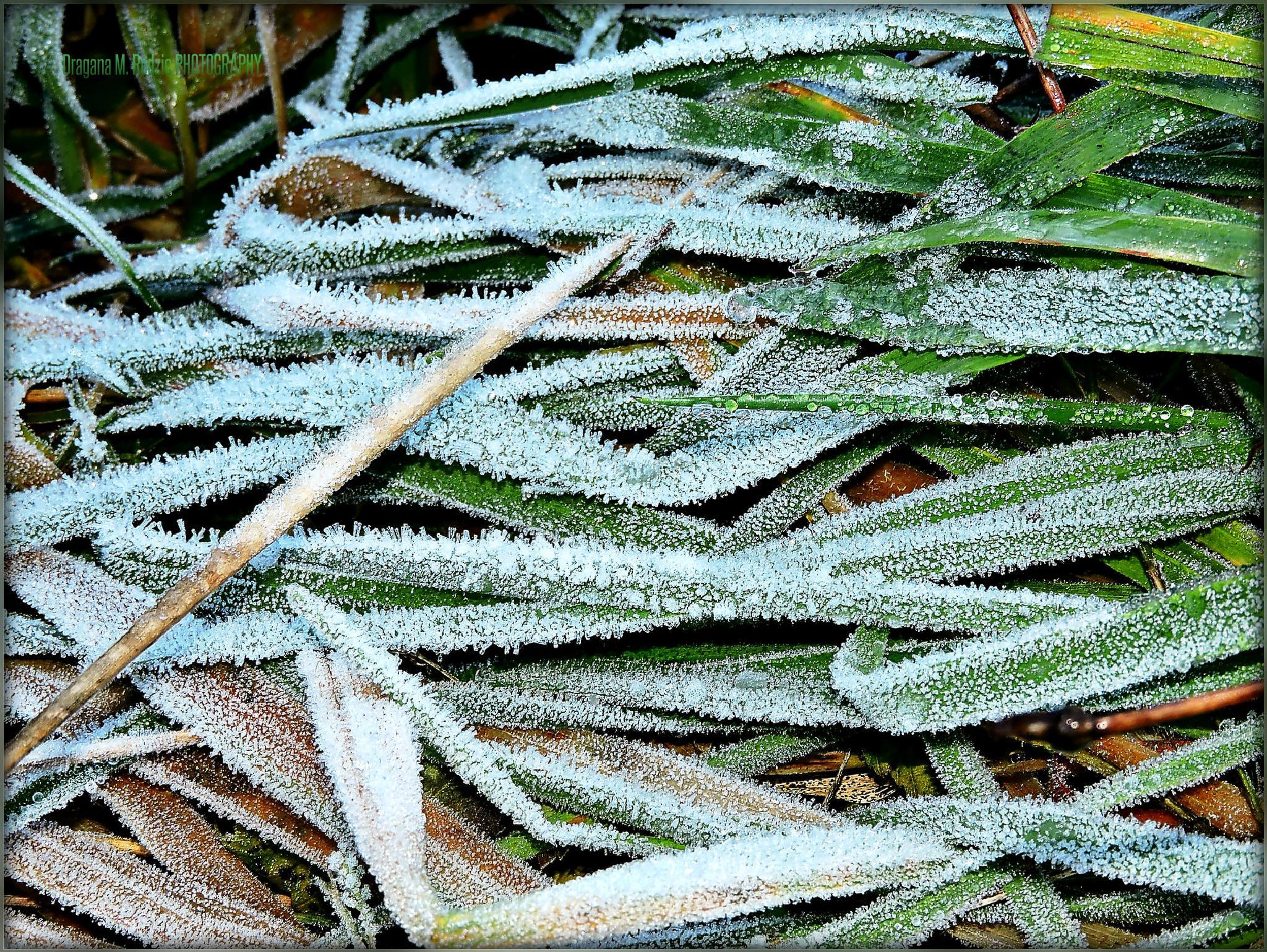 The frozen dew... by Драгана М. Реџић
