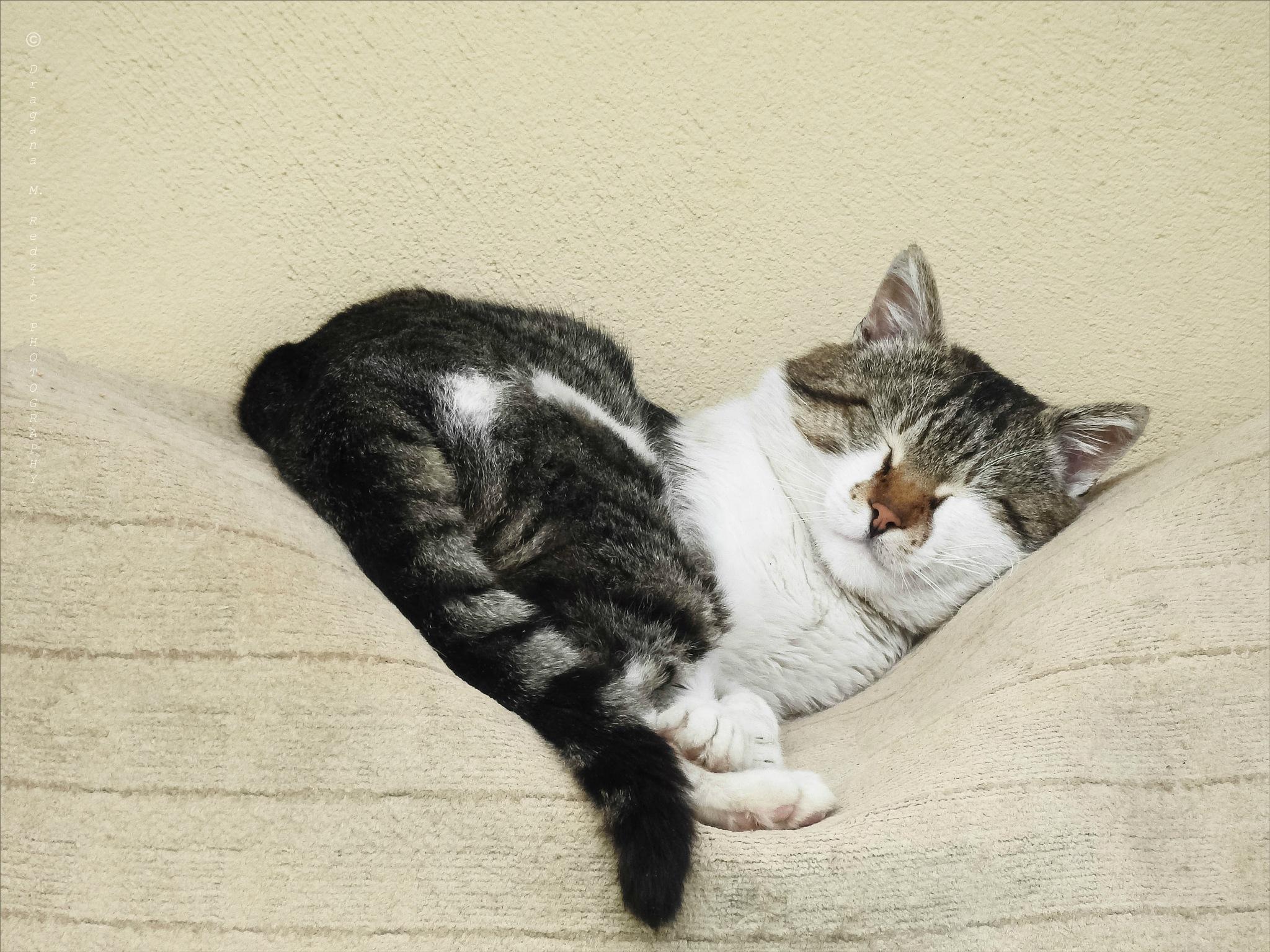 01 Tom Cat - Sweet dreams by Драгана М. Реџић