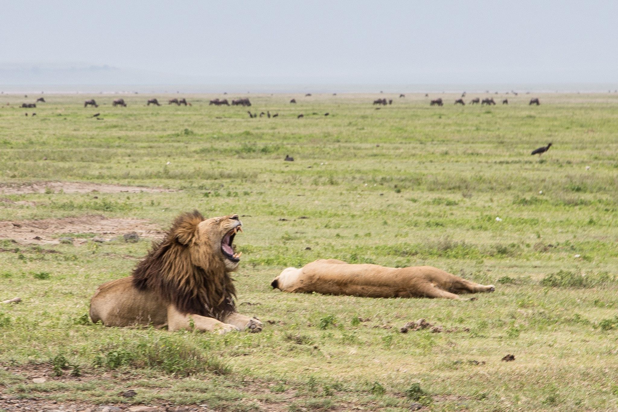 Ngorongoro Conservation Area, Ngorongoro, Arusha, Tanzania by Andrei Snitko