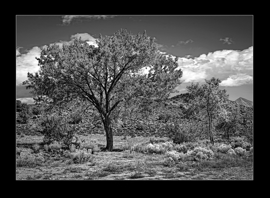 Moab Tree by Michael Anderson