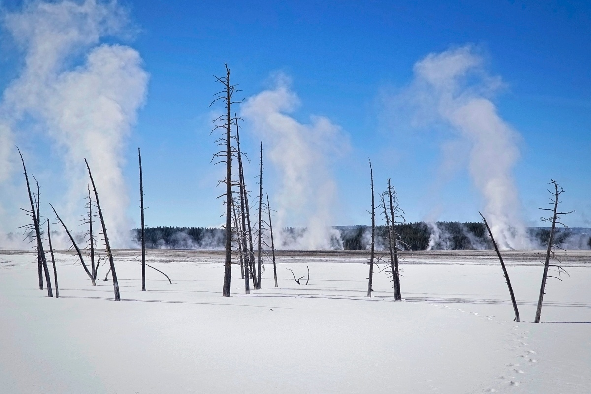 Photo in Travel #yellowstone #dead trees #snow #steam #winter