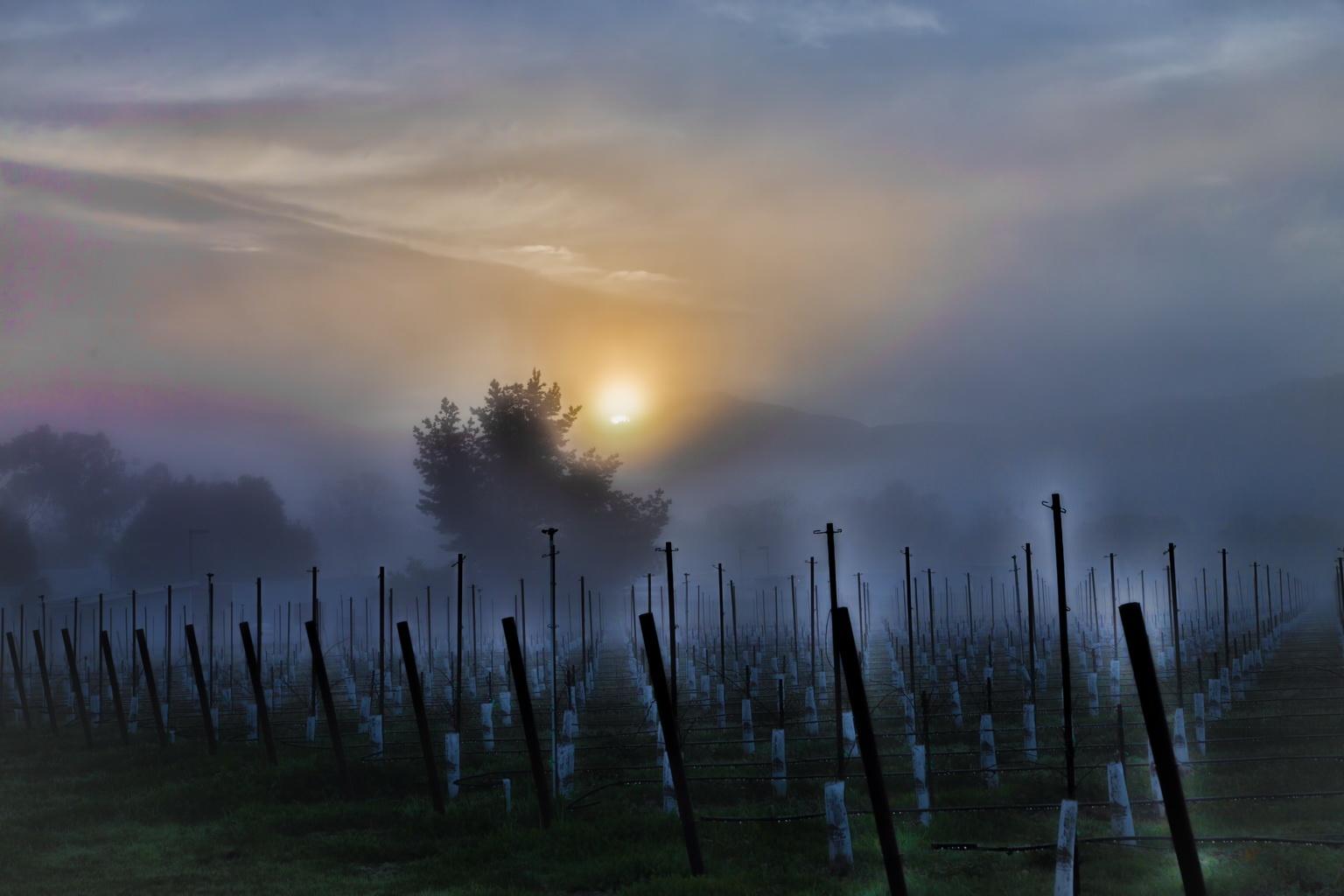 Mendocino vineyard by volkhard sturzbecher