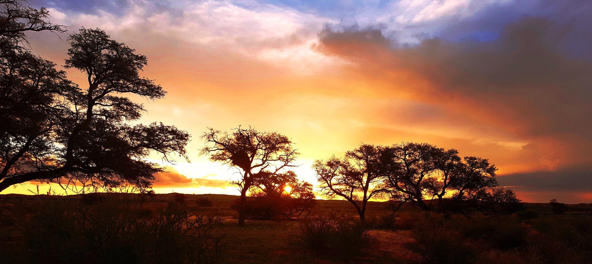 Kalahari Sunset by Pieter J de Villiers