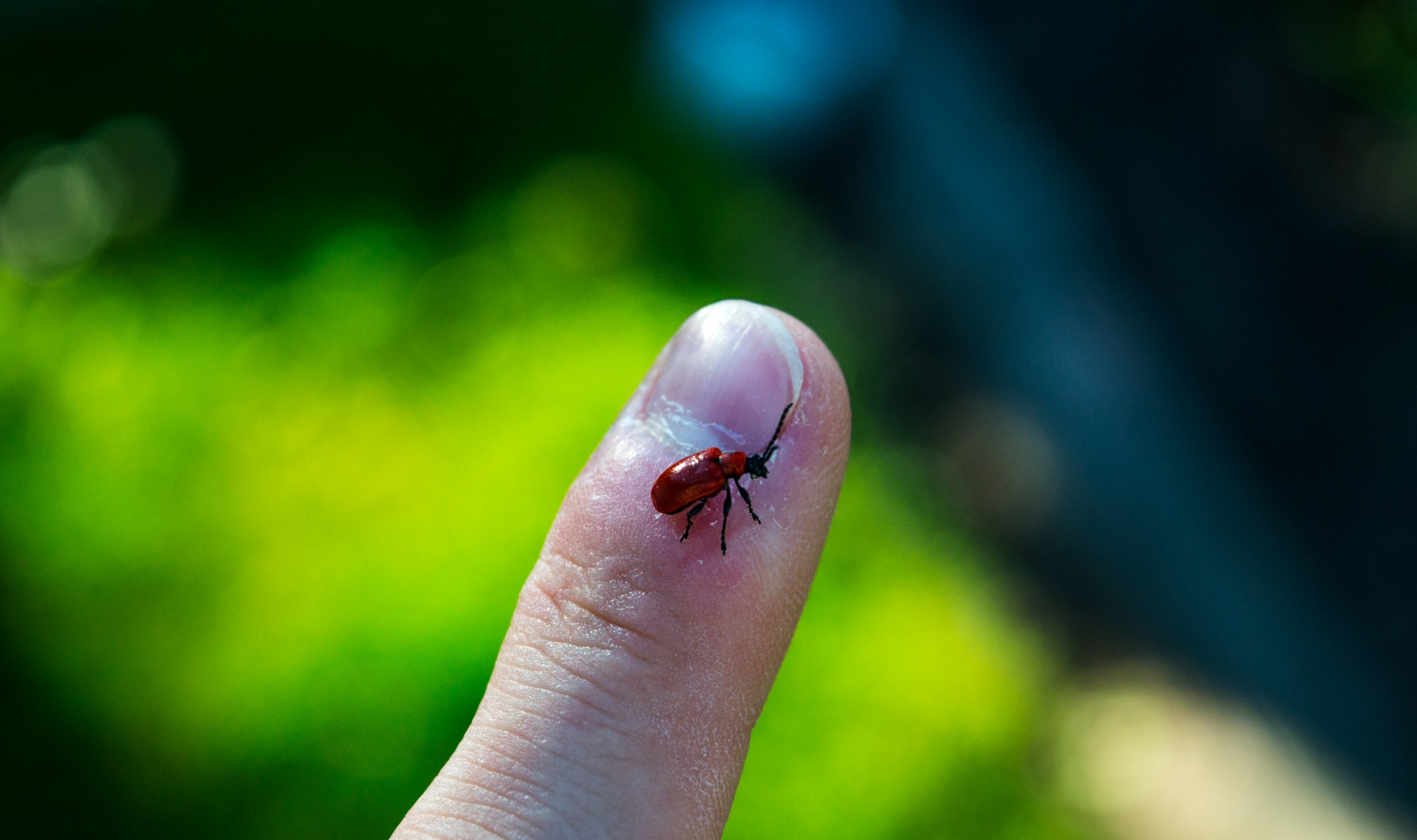 Tiny bug by Gytis