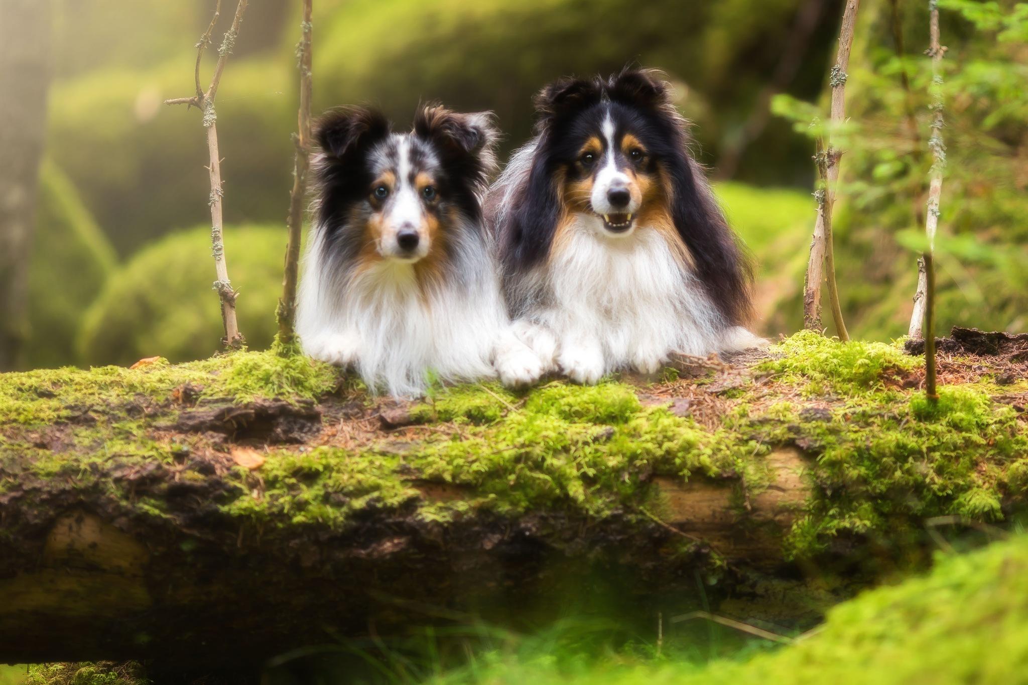 Doggies by idaeliasson88