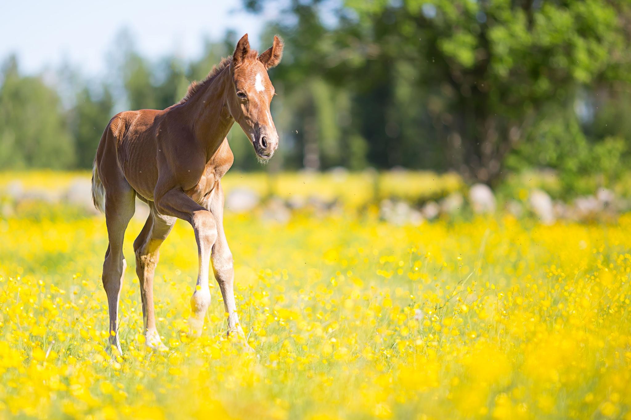 Photo in Animal #foal #horse #horses #cute