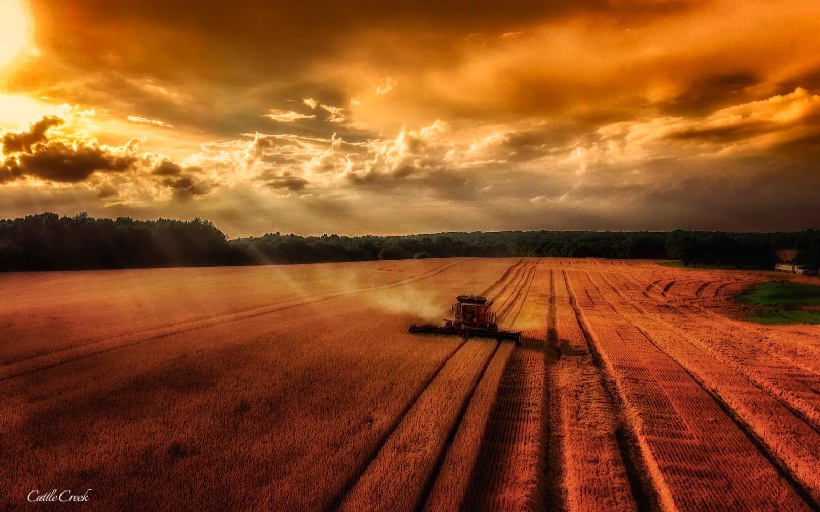 Golden Harvest by Tony