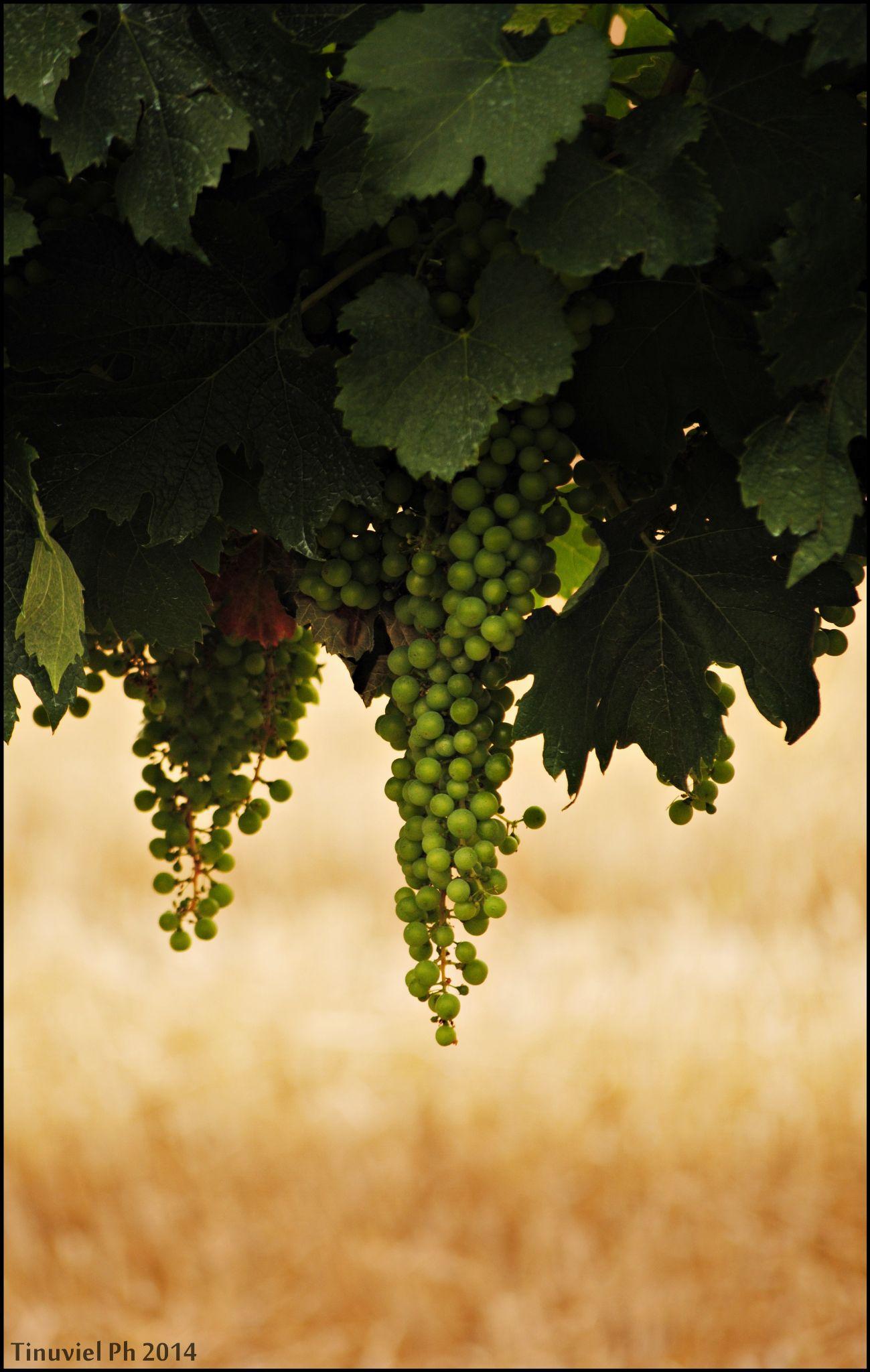 New Grapes by Marika Meneghini