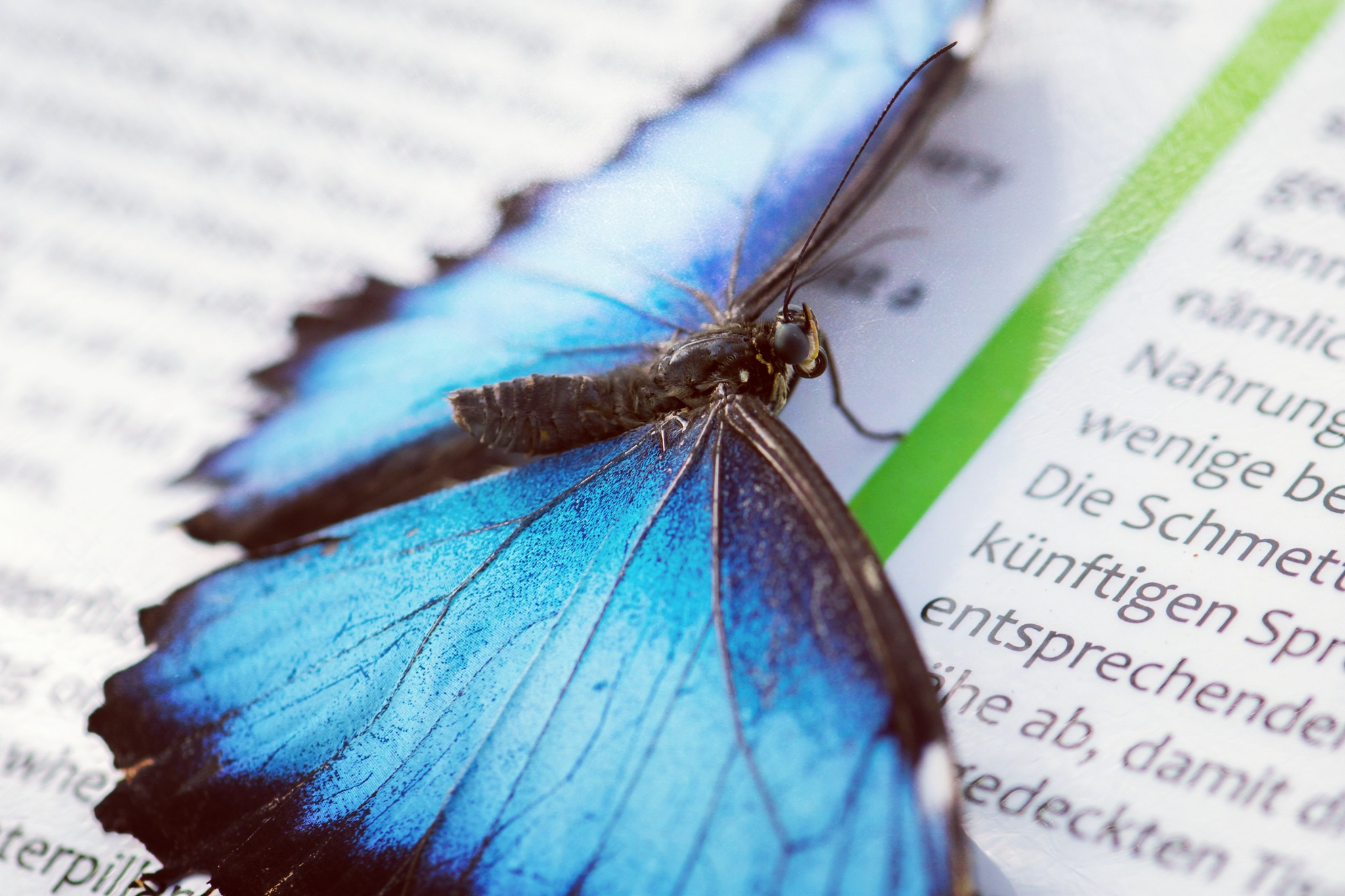 reading butterfly by Nicolet Visser