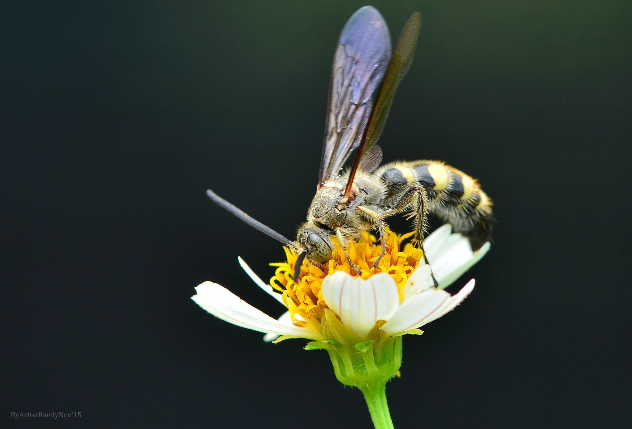 THE FLOWER LOVER ( NATURE LIGHT ) by azharramly