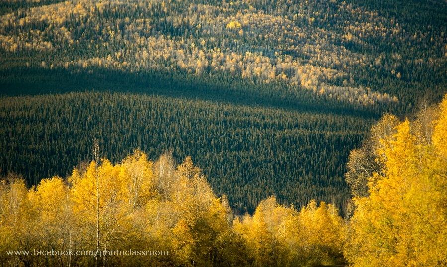 Photo in Landscape #alaska #fairbanks #autumn #dalton highway #yellow
