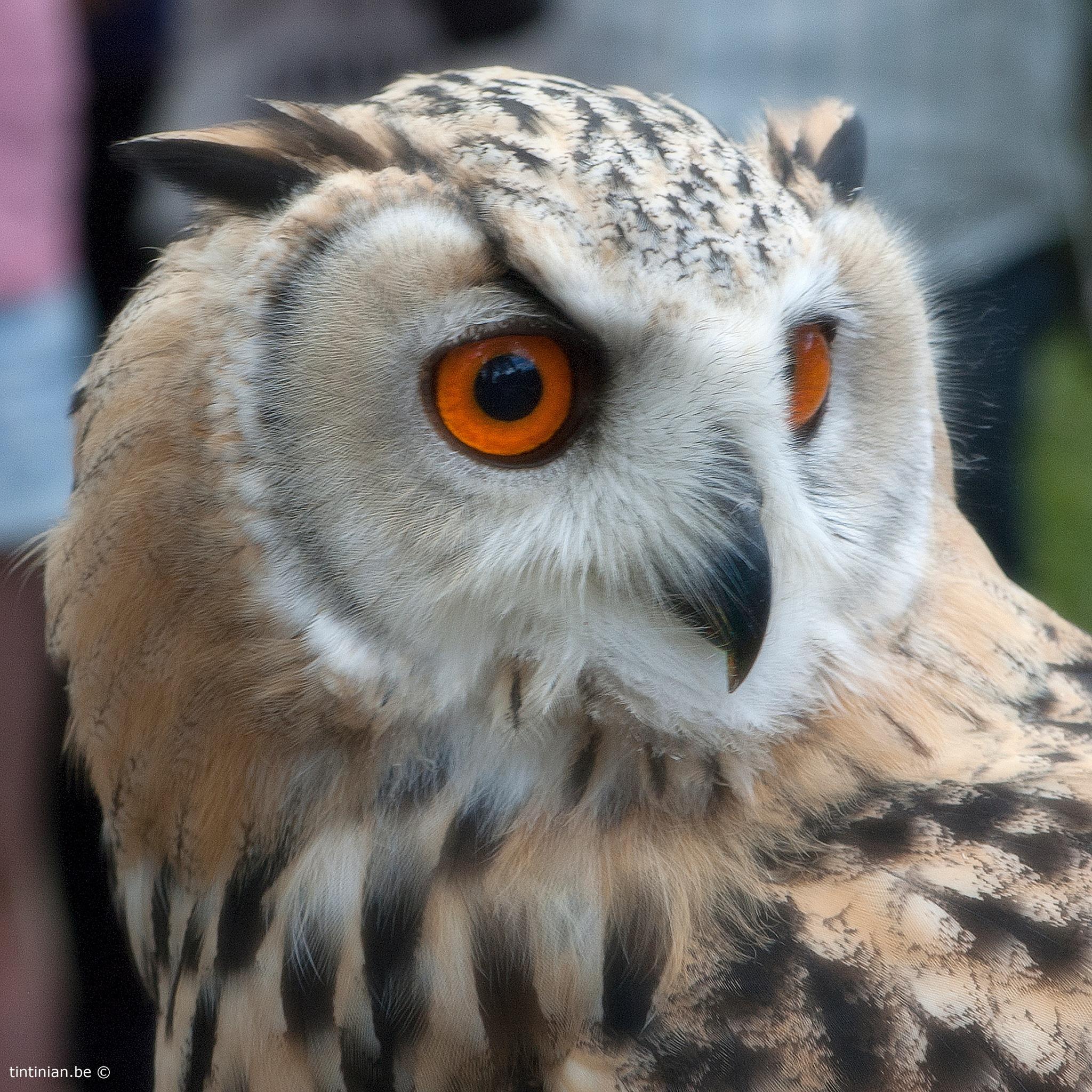Owl by Etienne de Maeyer