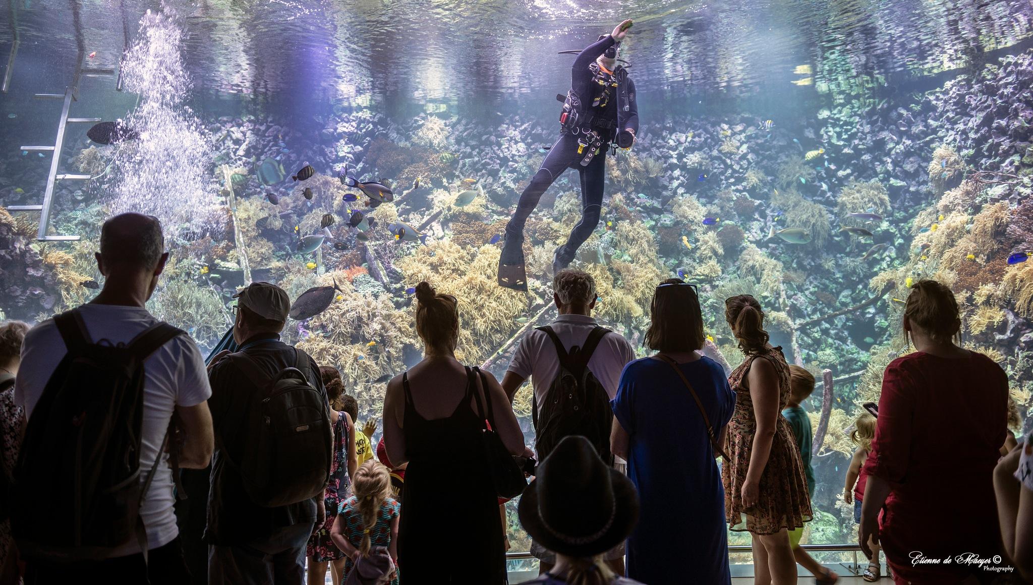 Koraalrif aquarium zoo Antwerpen by Etienne de Maeyer
