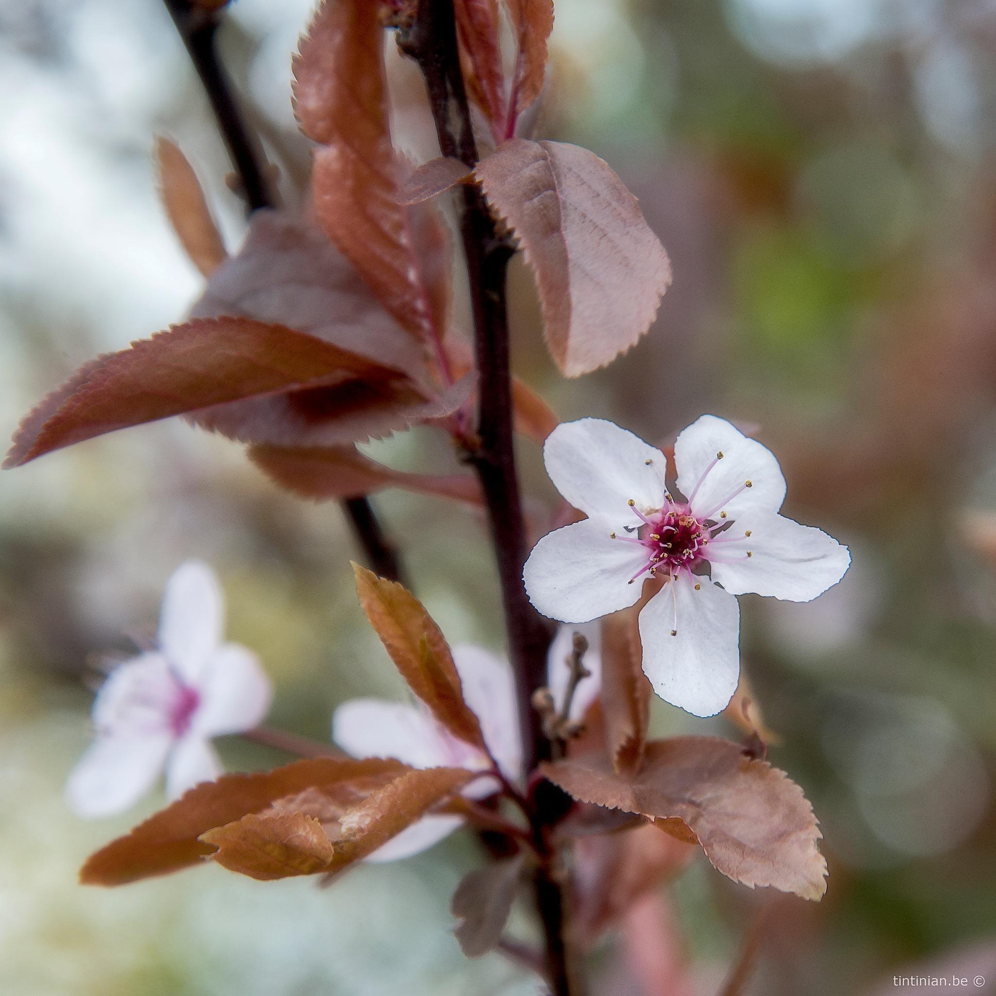 Flower by Etienne de Maeyer