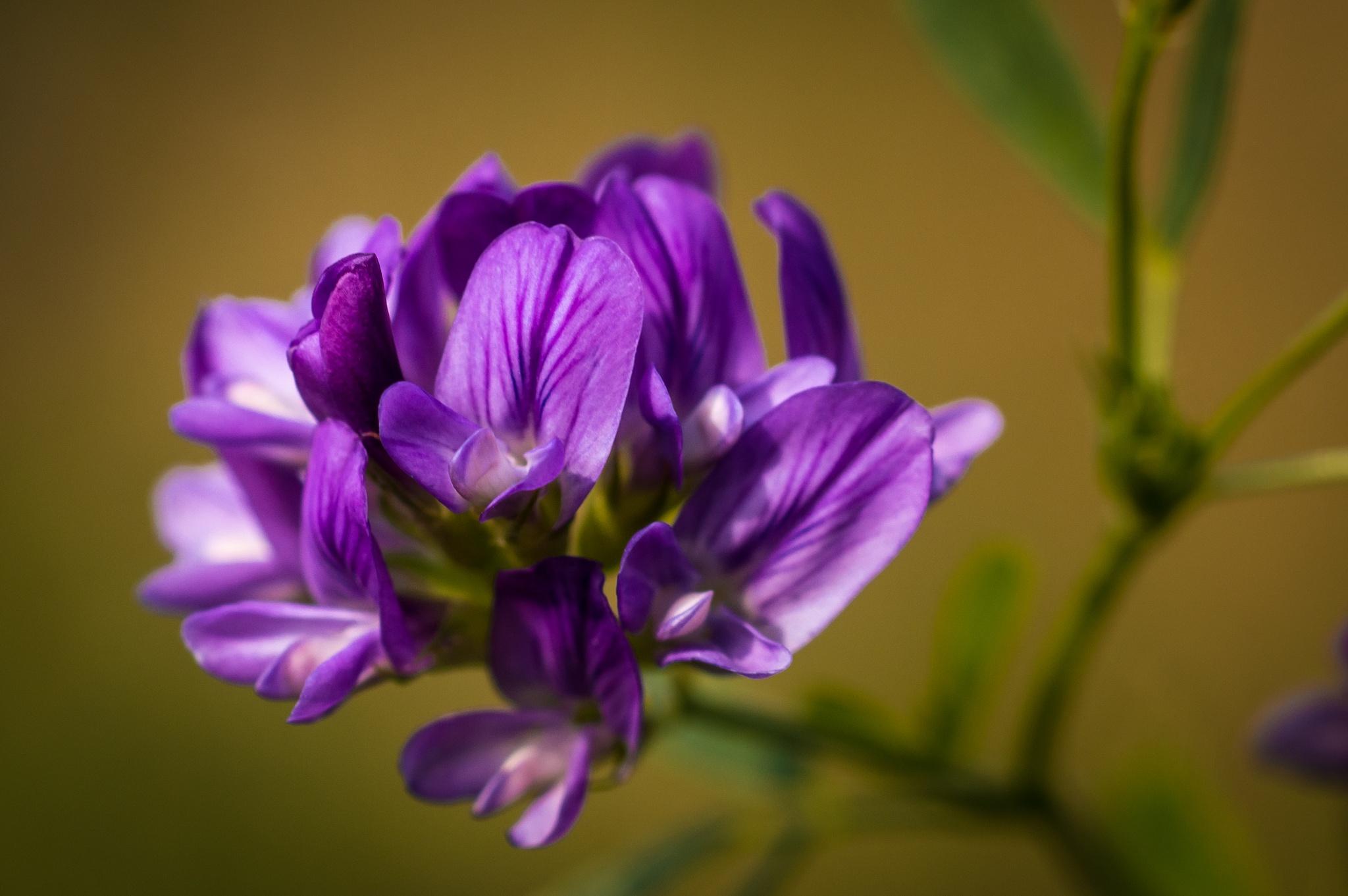 purple by Werner Hofmann