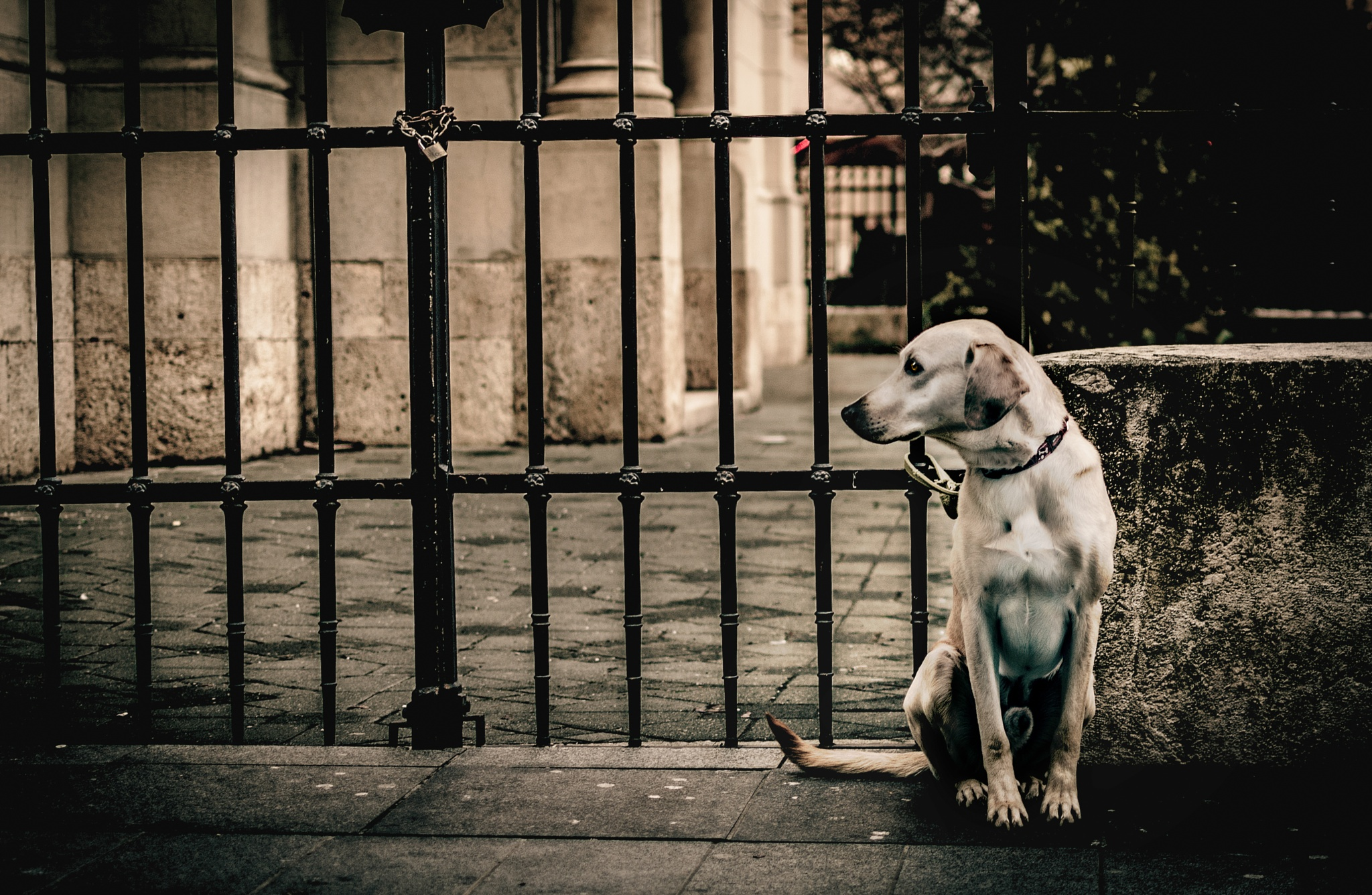 lonely dog by davor_djopar