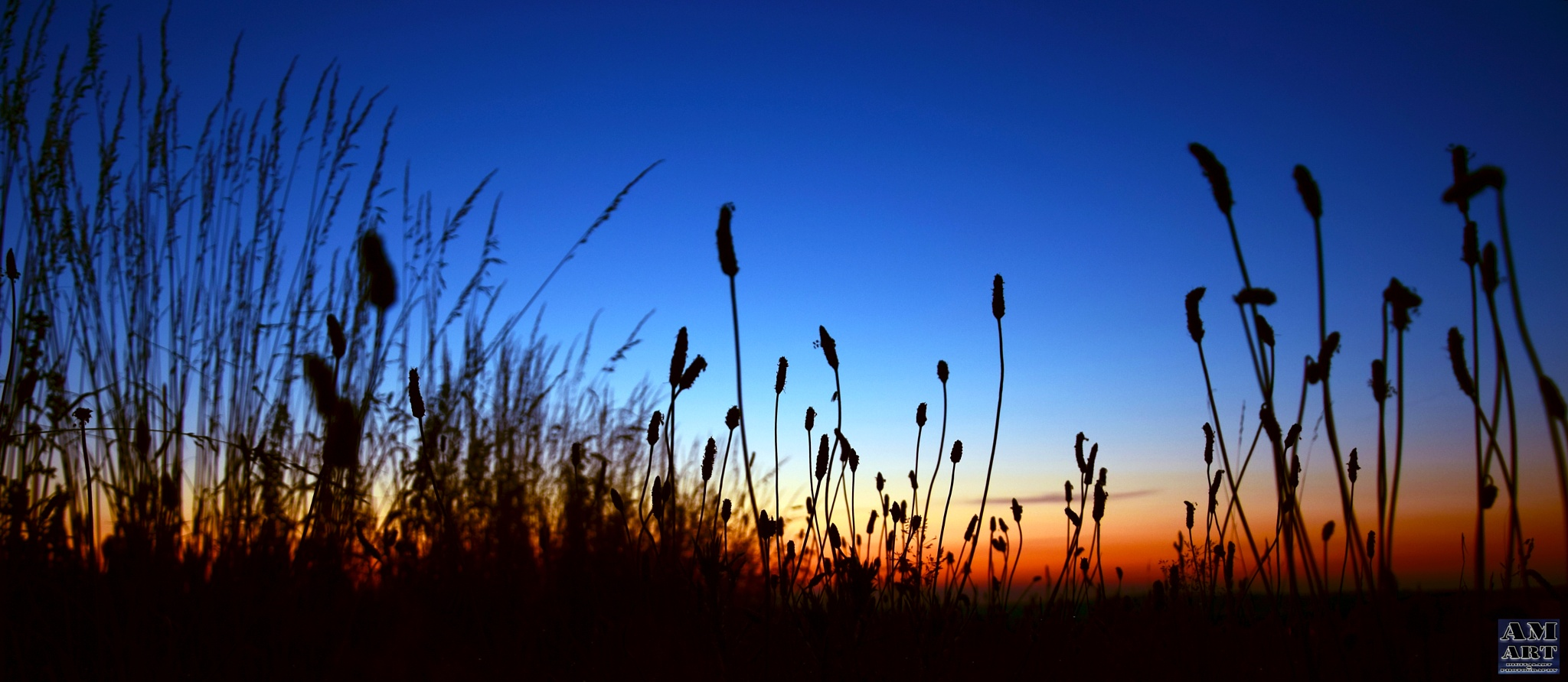Sunset in deep grass by Andree Michalski