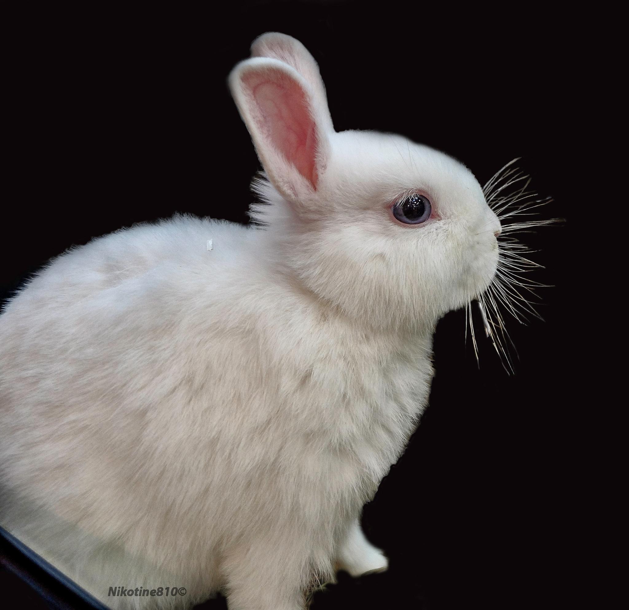 Benjamin Bunny by Martine GLASMACHER