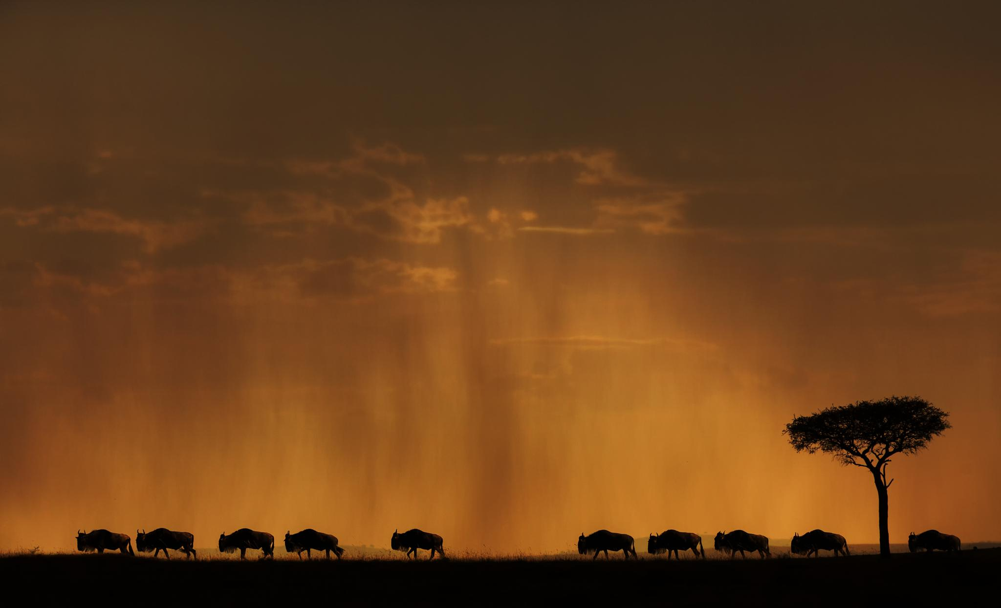 The Migration by jassioberai