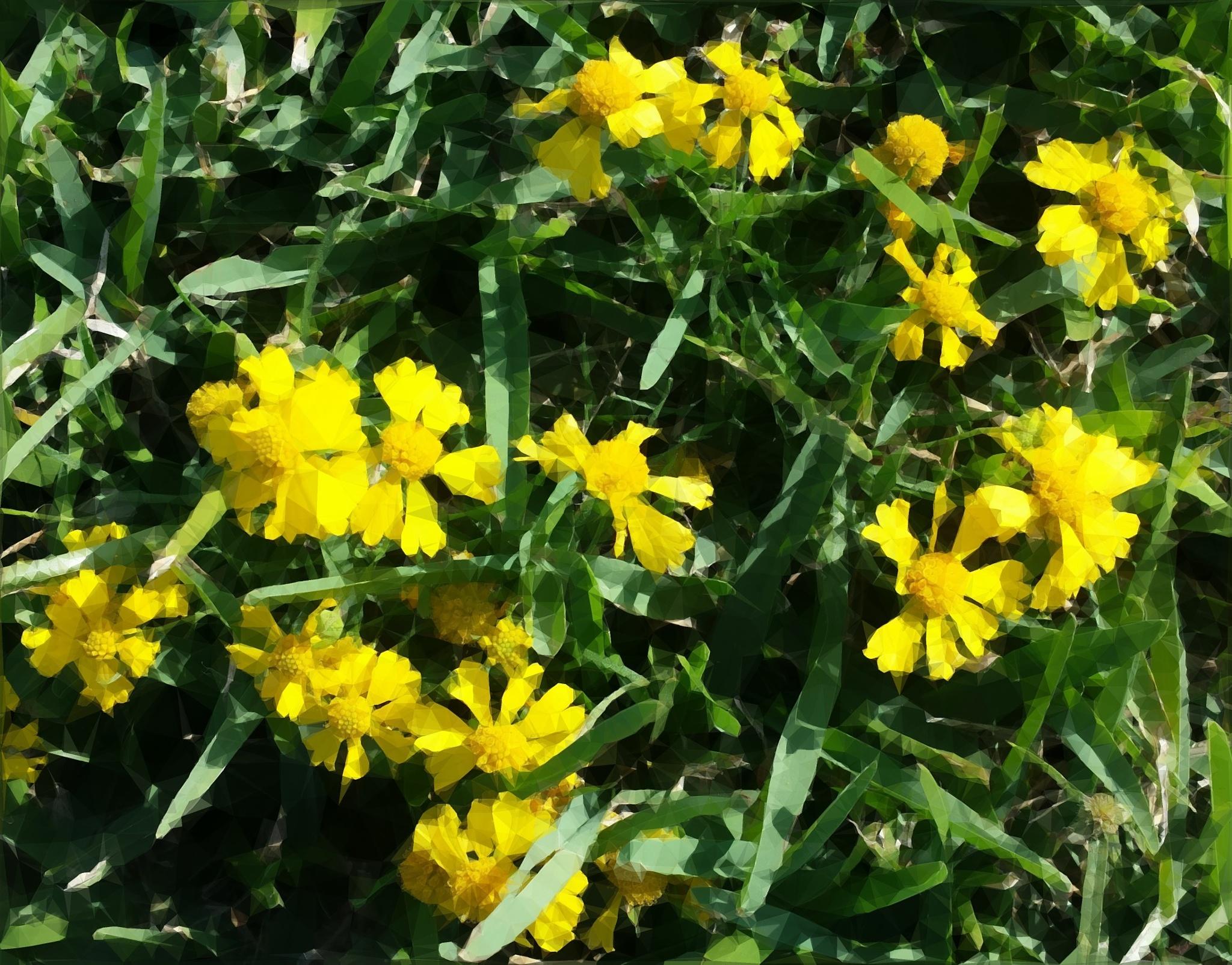 Littered in Flowers by Missy Rubenstein
