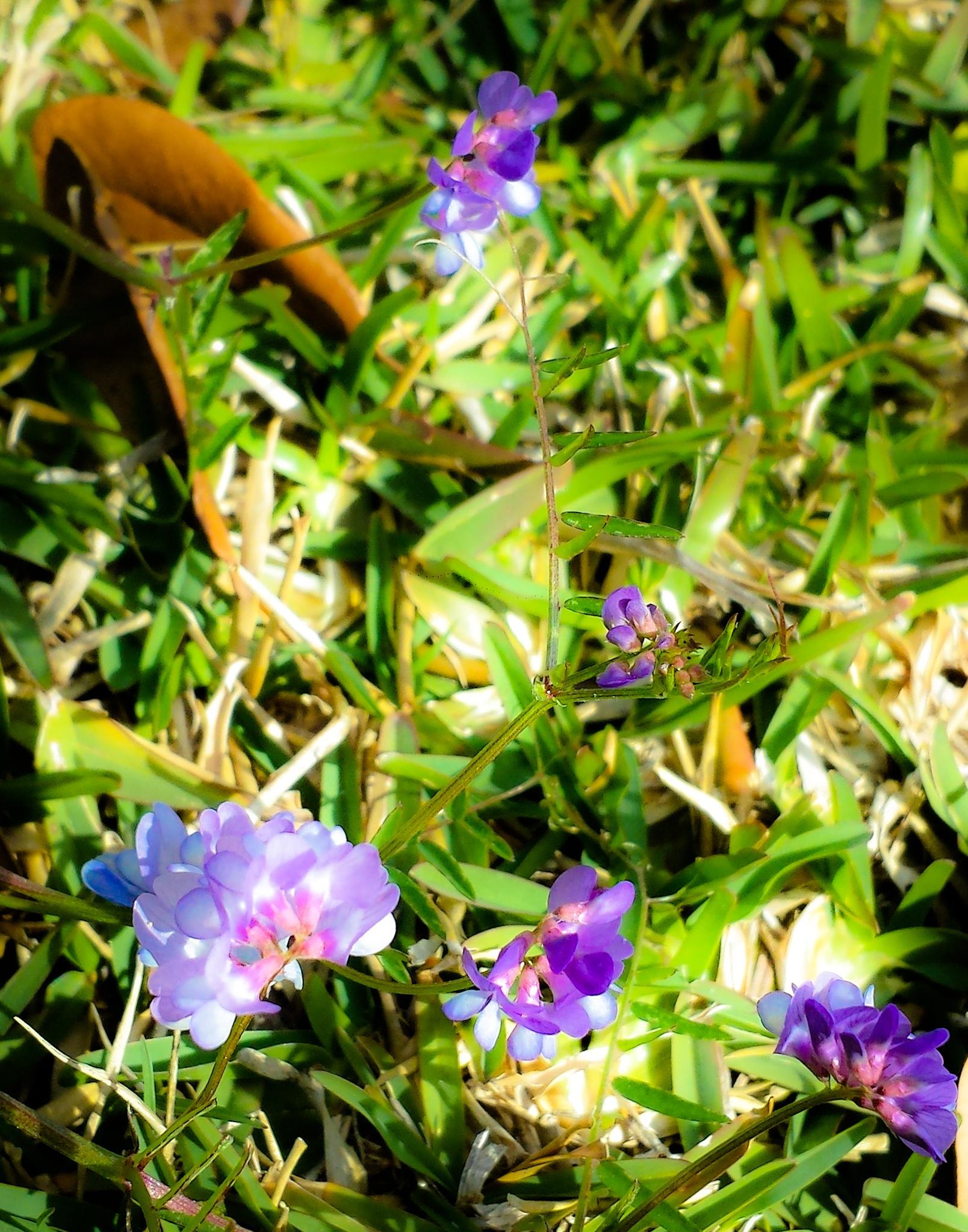 Pretty in Purple 1 by Missy Rubenstein
