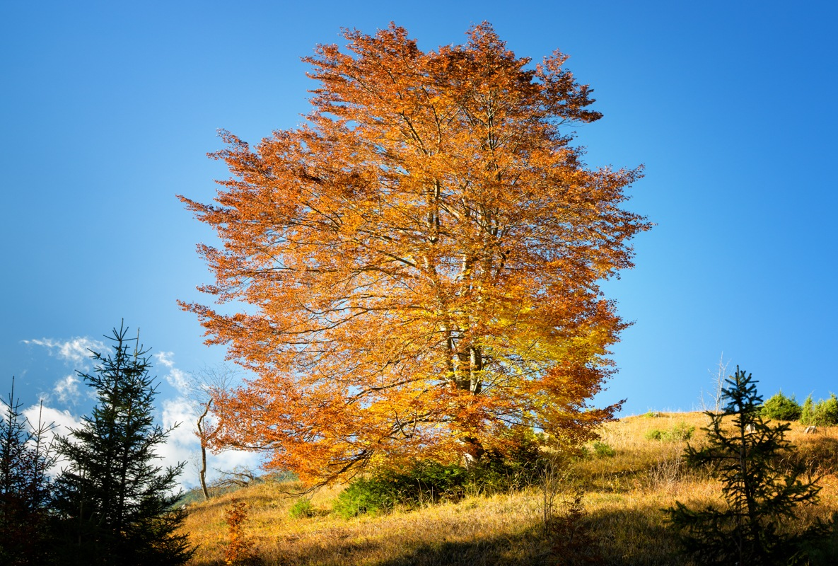 Autumn Glory by Walter Quirtmair