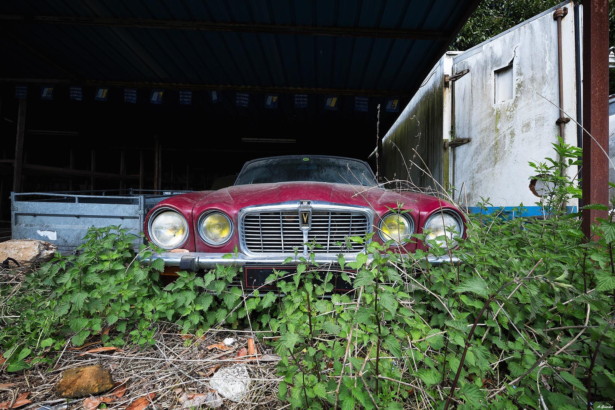Jaguar abandonnée. by anthonygourdet3