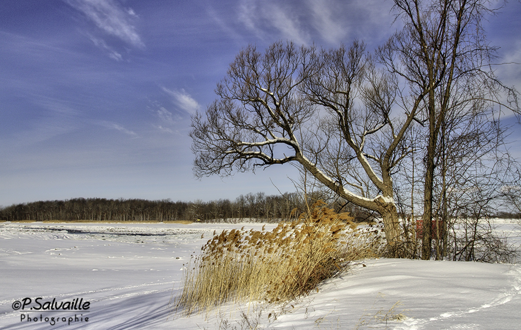 Cold Day by Pierre Salvaille