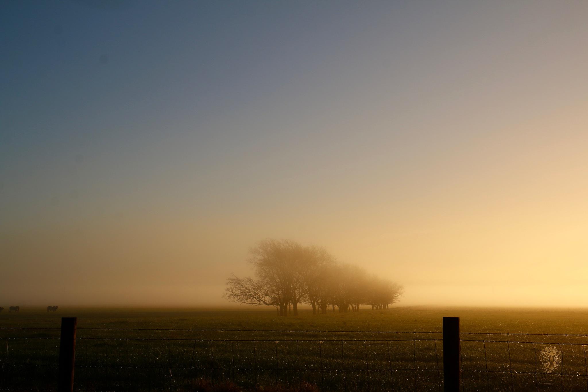 Misty Morning by joleblanc10